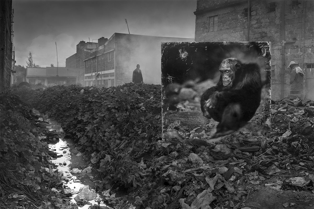 Chimpanzee-in-Alleyway