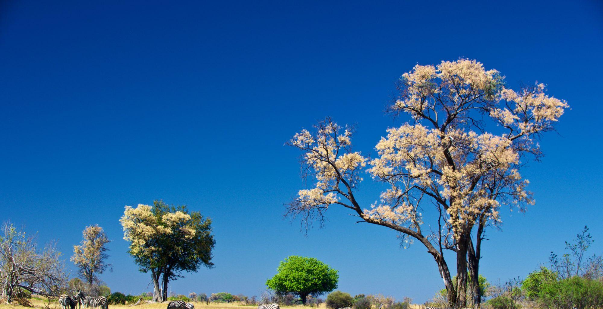 Okavango Delta Botswana Spring Views