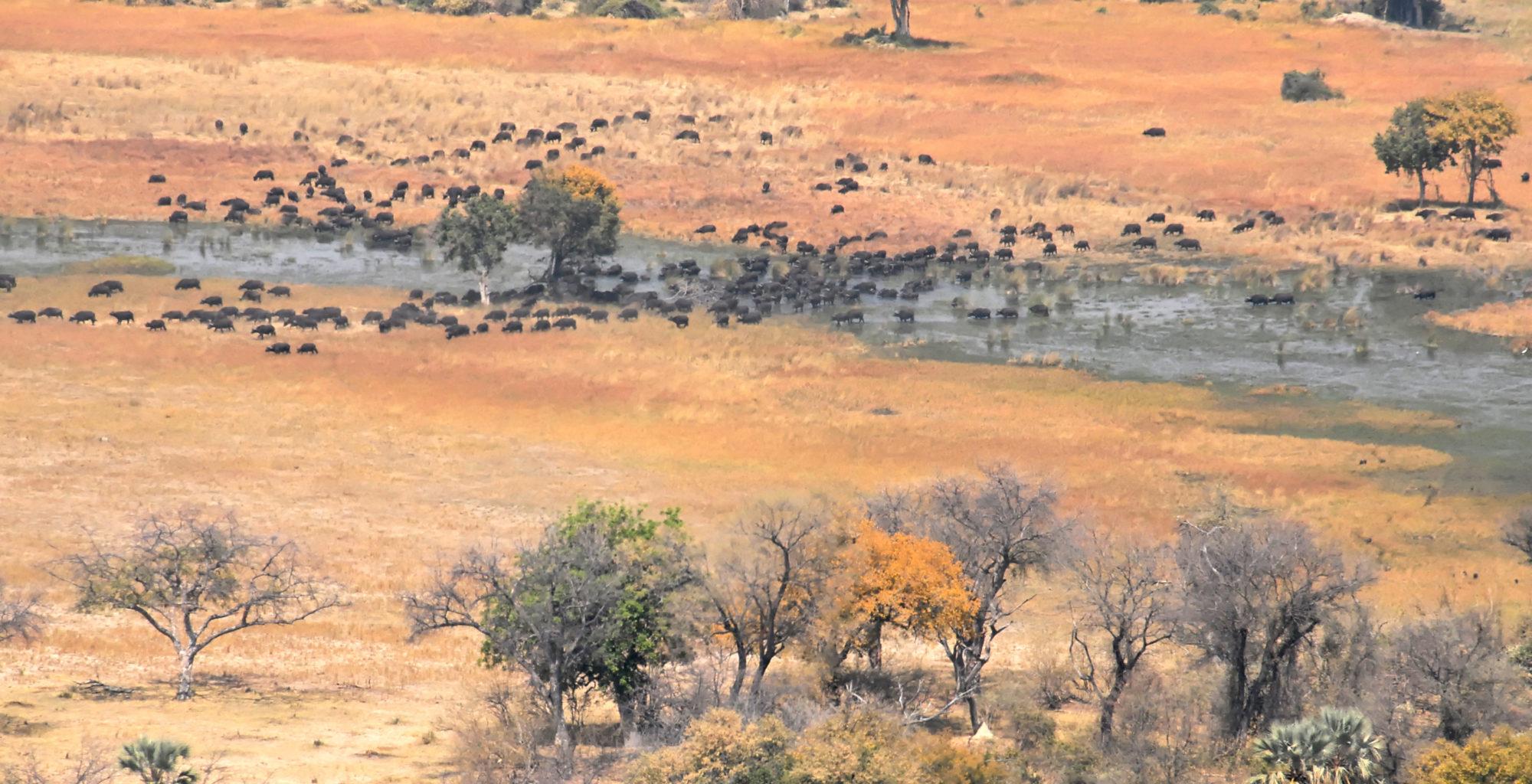 Okavango Delta Botswana Aerial