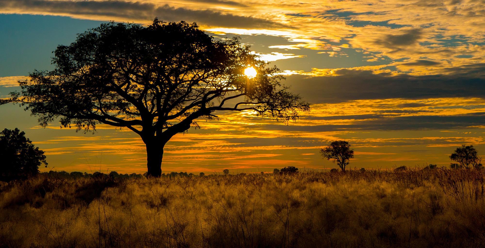 Botswana-Okavango-Delta-Landscape-Sunset