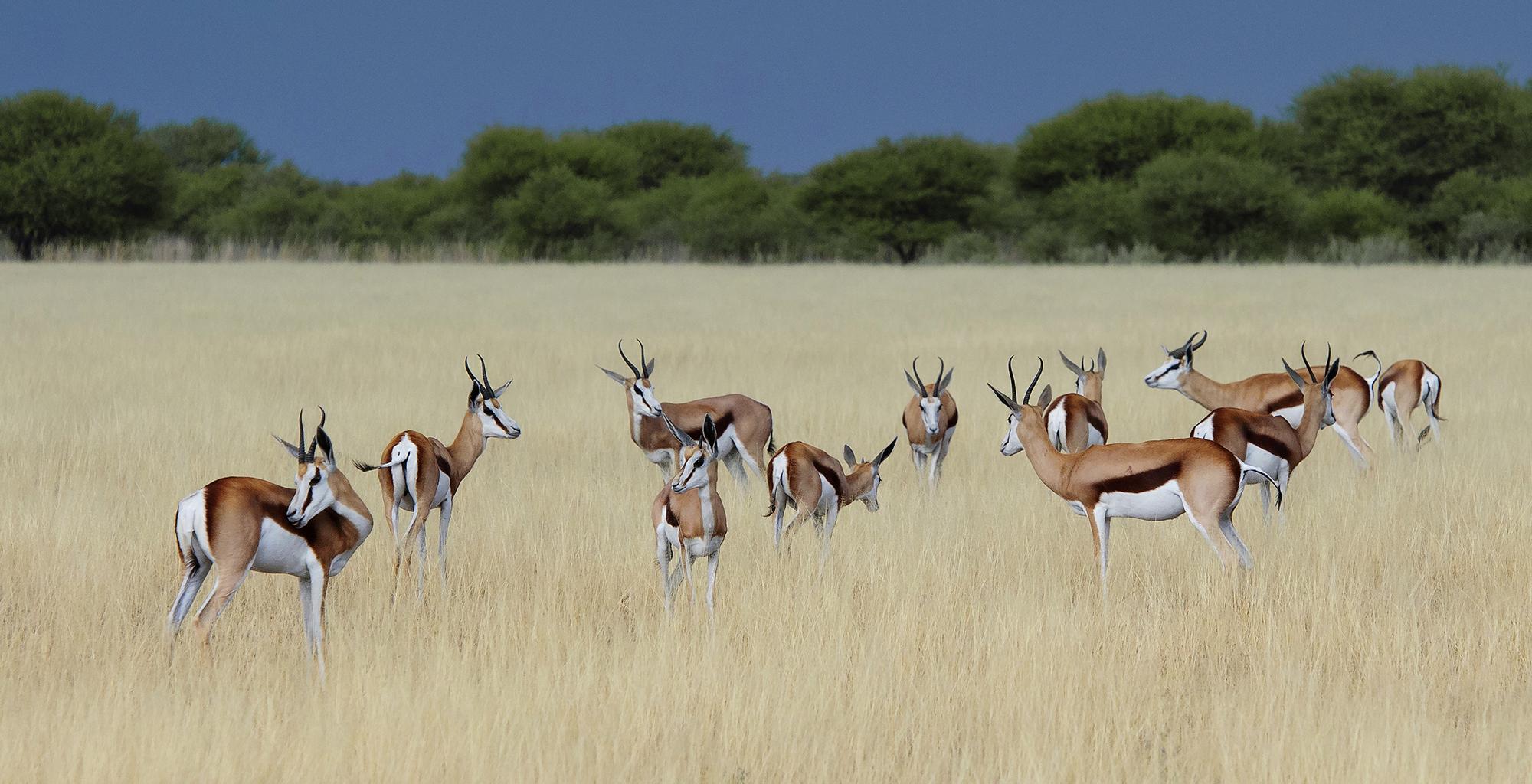 Botswana-Kalahari-Plains-Wildlife