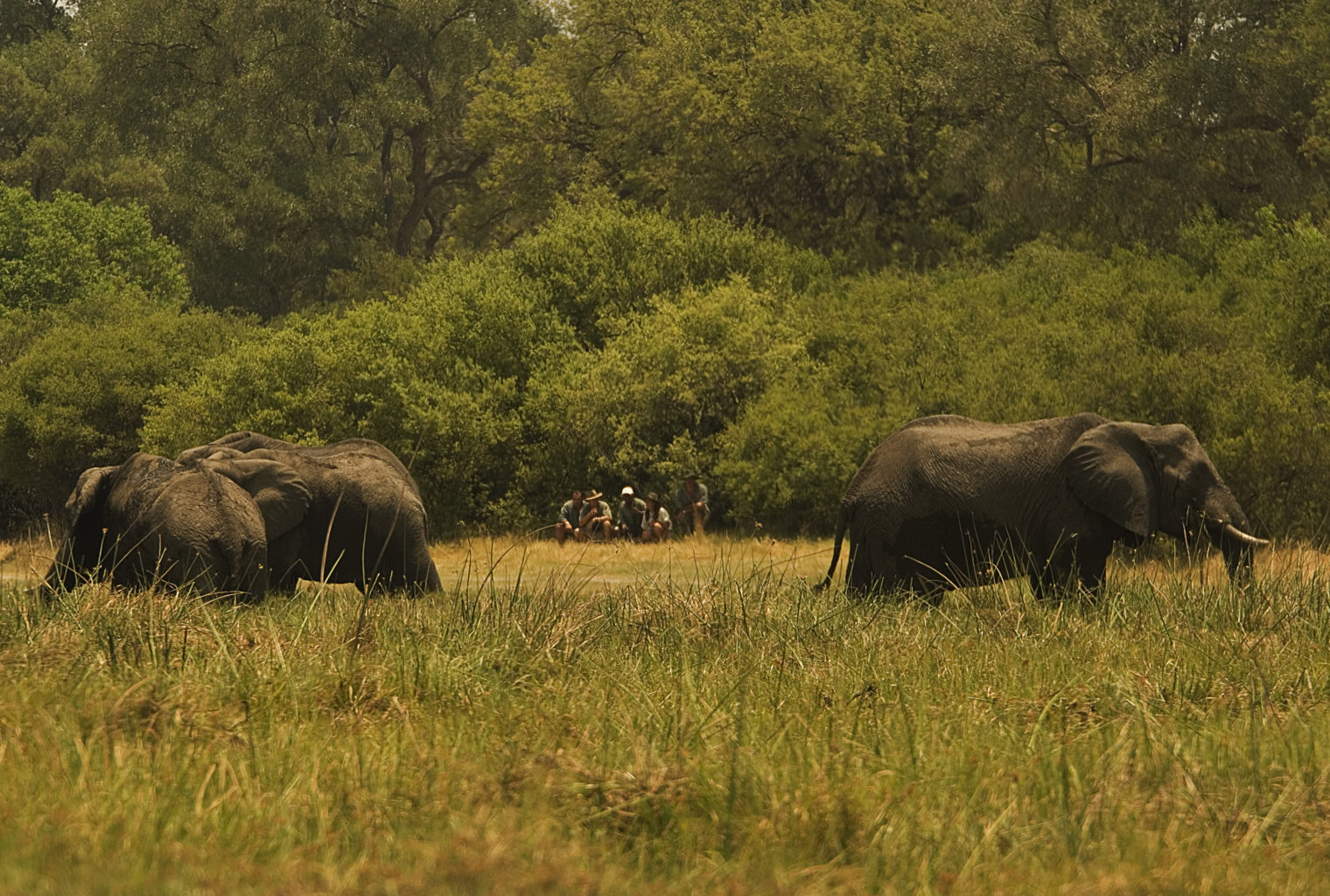 Saile-Tented-Camp-Botswana-wildlife