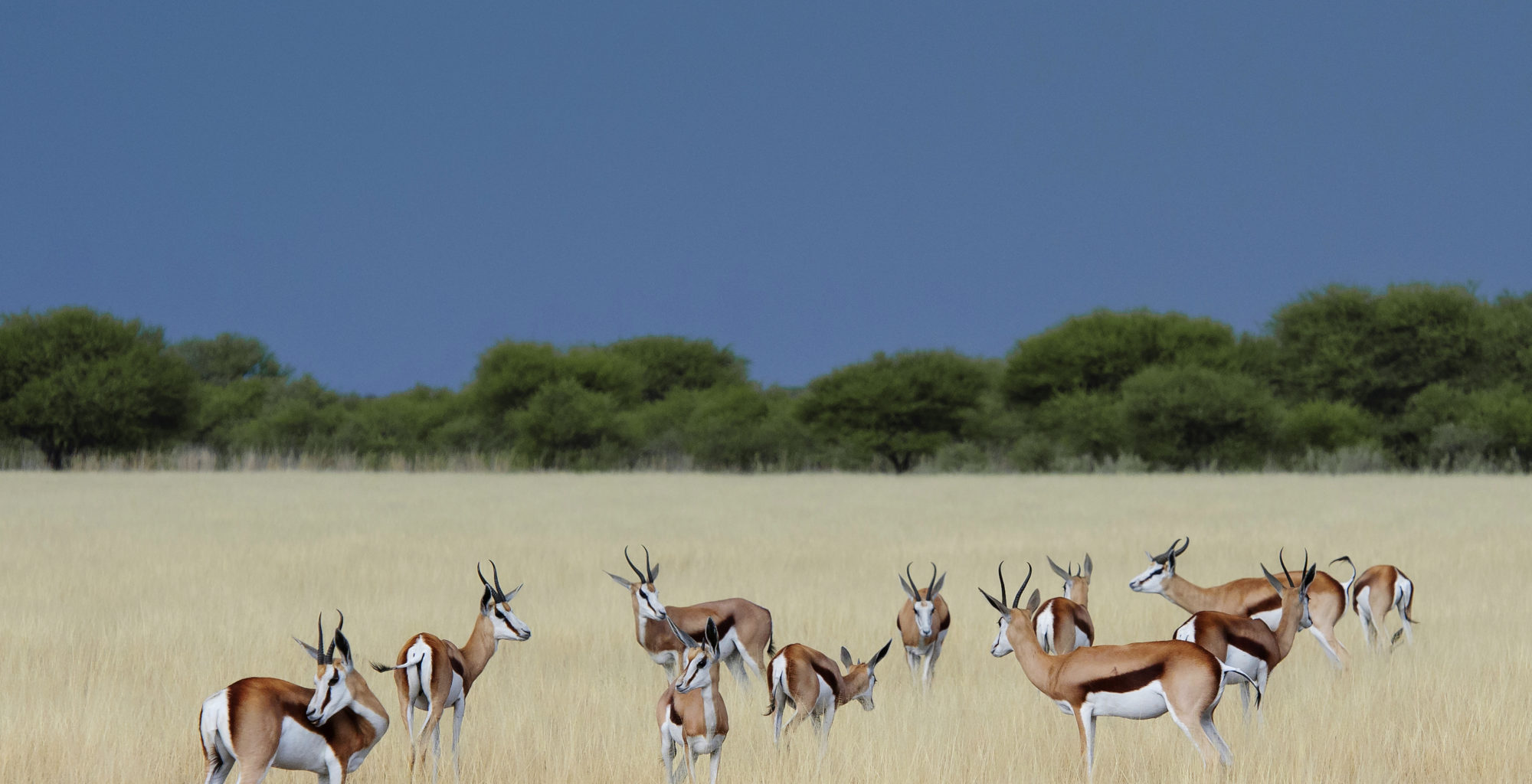 Botswana-Kalahari-Reserve-Landscape-Wildlife