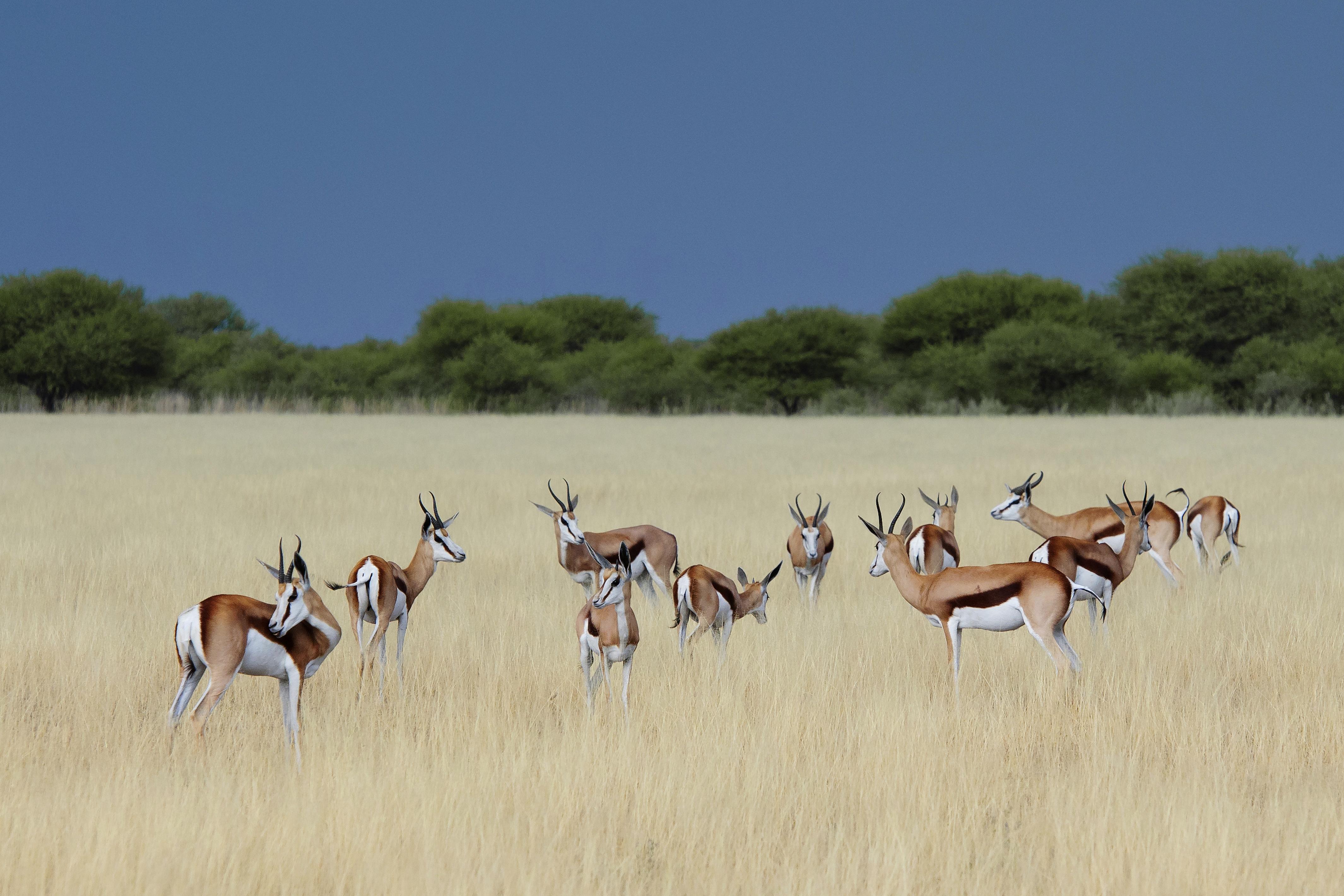Kalahari Reserve Botswana Wildlife