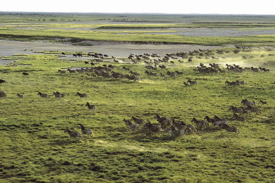 Makgadikgadi Botswana Migration
