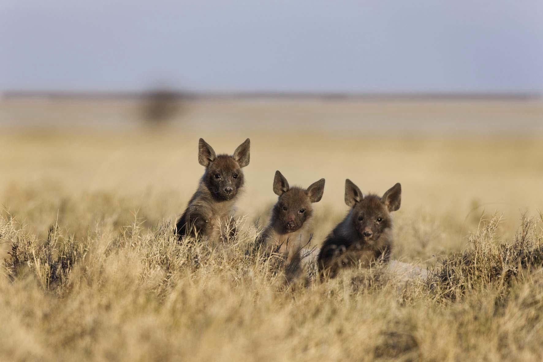 Makgadikgadi Botswana Wildlife