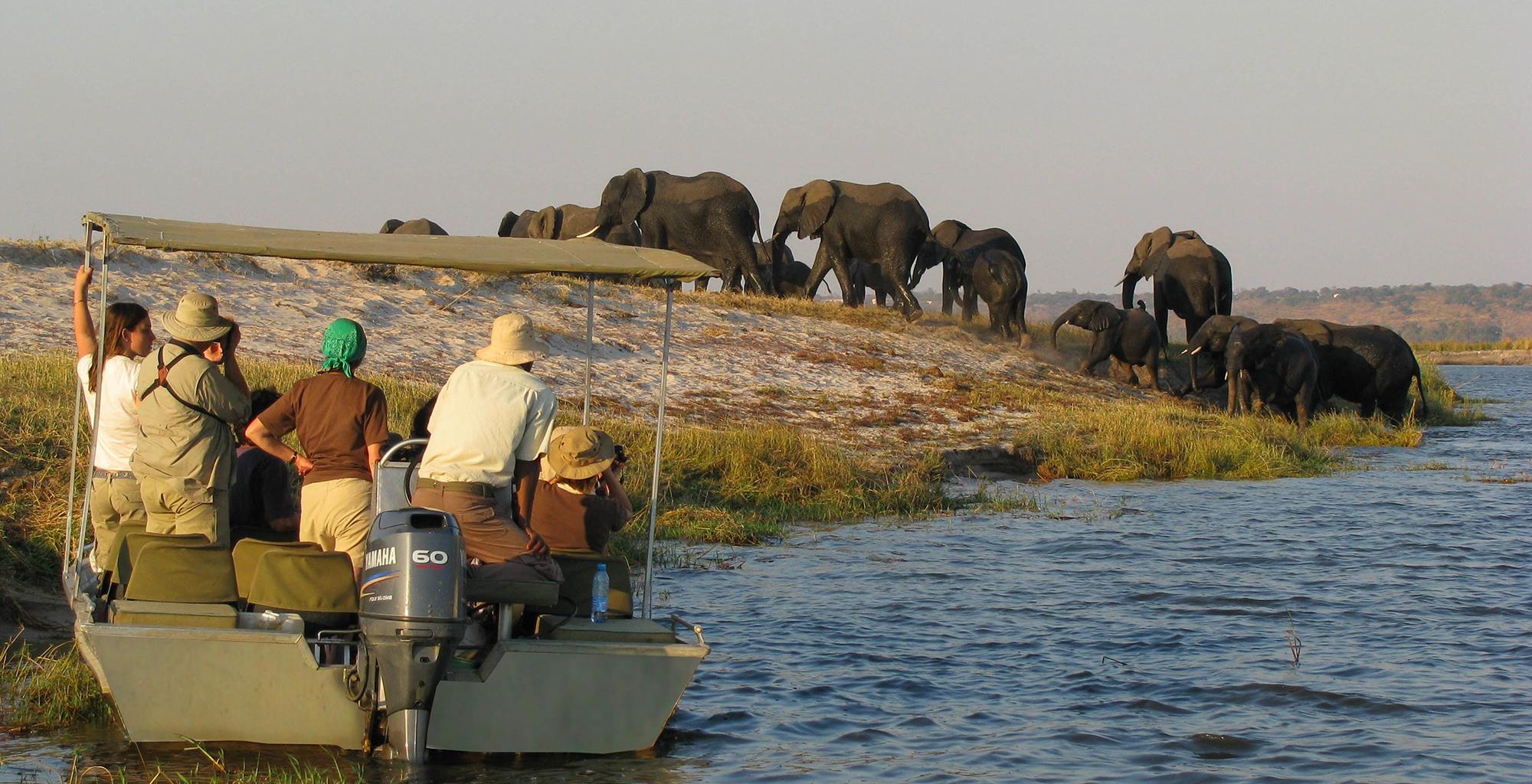 Botswana-Chobe-National-Park-Boating-Elephant