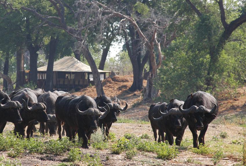 Botswana-Chobe-Enclave-Wildlife