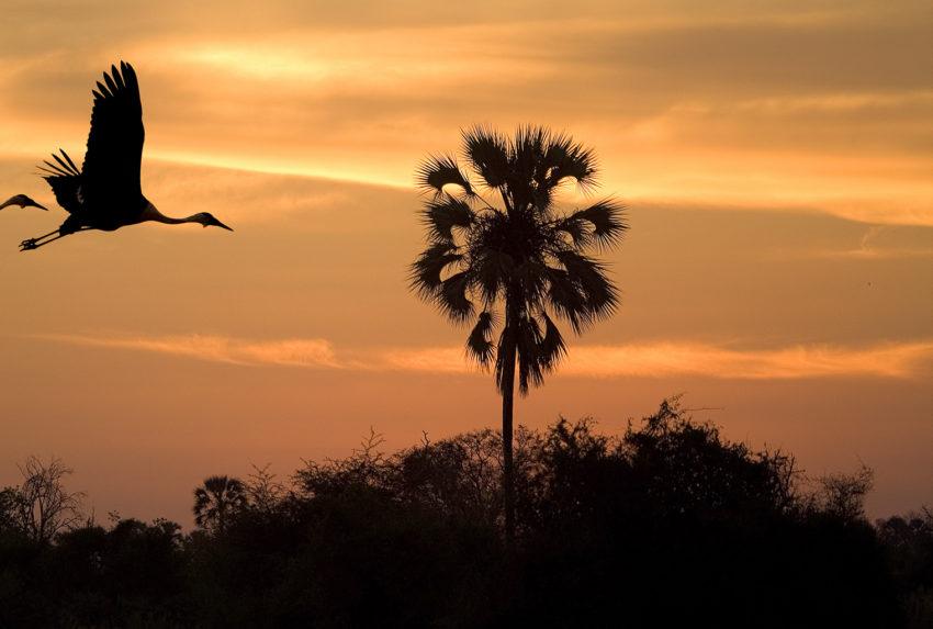 Botswana-Linyanti-Sunset