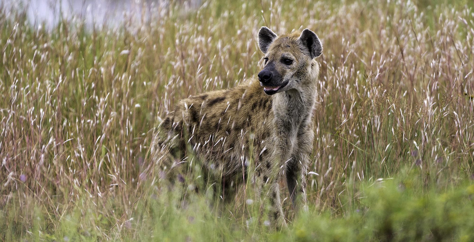 Botswana-Linyanti-Wildlife