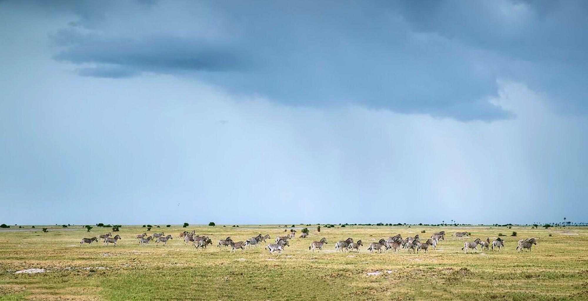 Botswana-Kalahari-Makgadikgadi-Pans-Wildlife-Migration