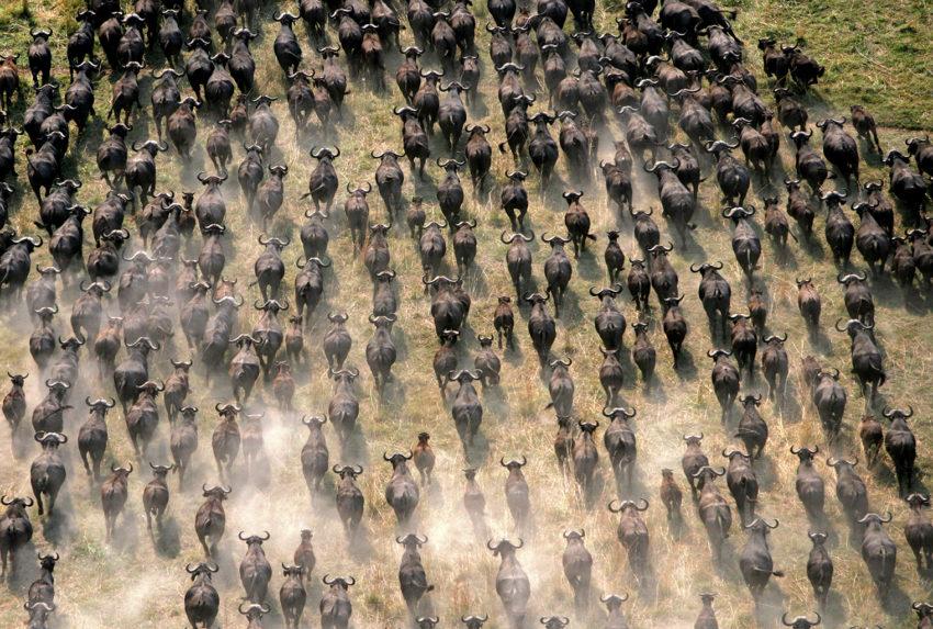 Botswana-Selinda-Concessions-Wildlife-Migration