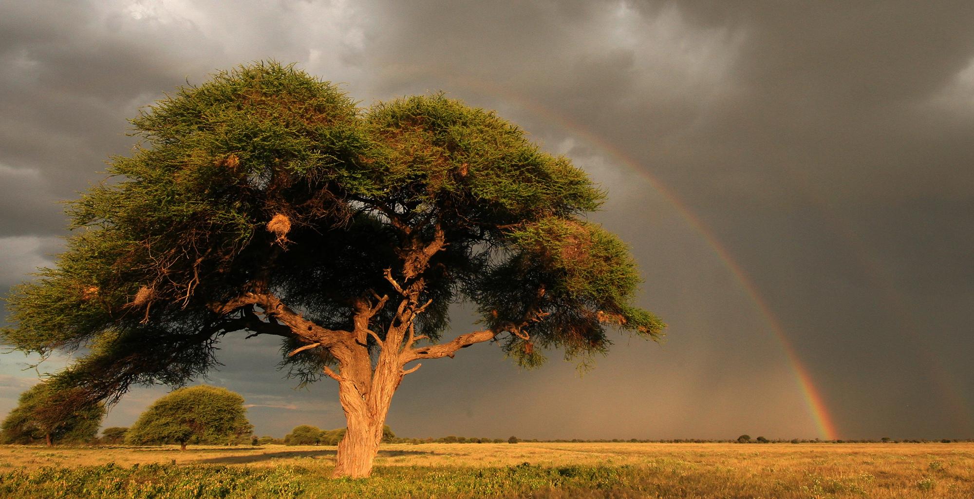 Botswana-Kalahari-Reserve-Tree-Rainbow