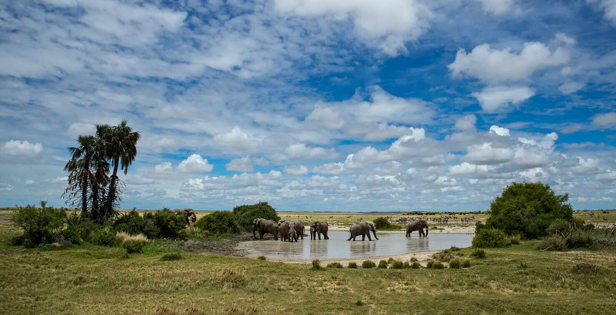 Botswana-Kalahari-Makgadikgadi-Pans-Wildlife-Elephant