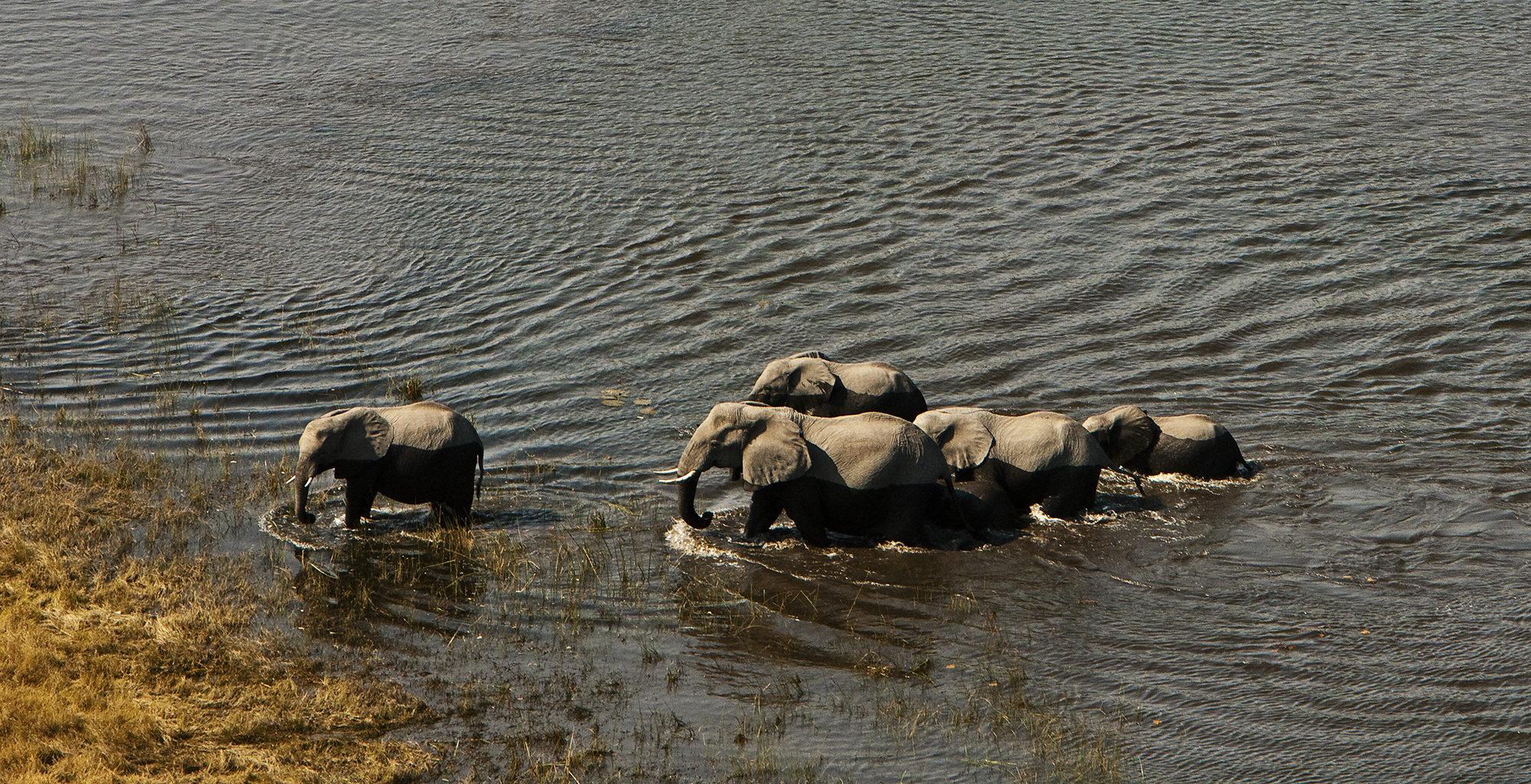 Botswana-Selinda-Concessions-Wildlife-Elephant