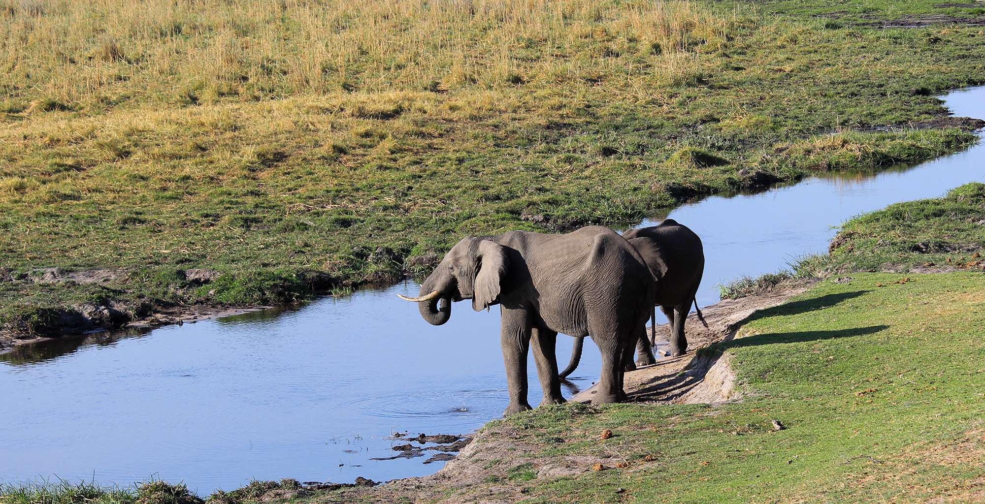 Botswana-Chobe-Enclave-Wildlife-Elephant