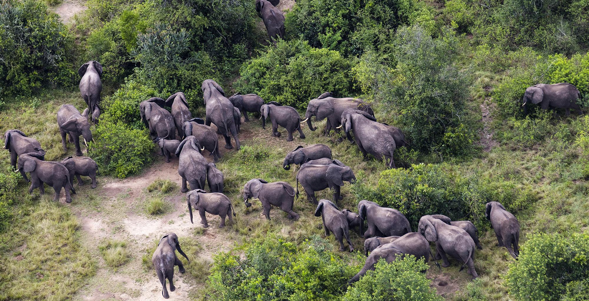 DRC-Lulimbi-Wildlife-Elephant