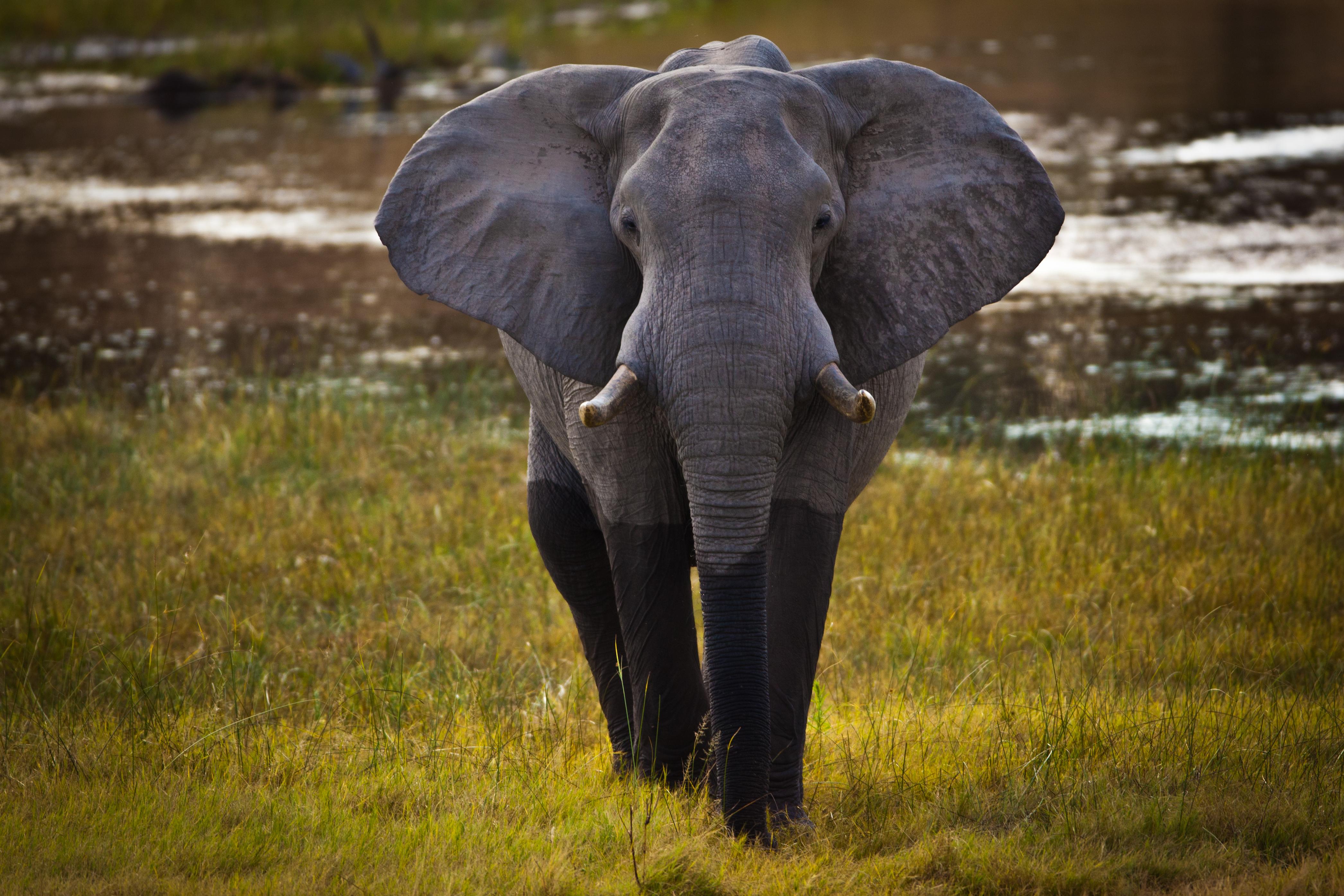 Savute-Elephant-Camp-Botswana-Elephant