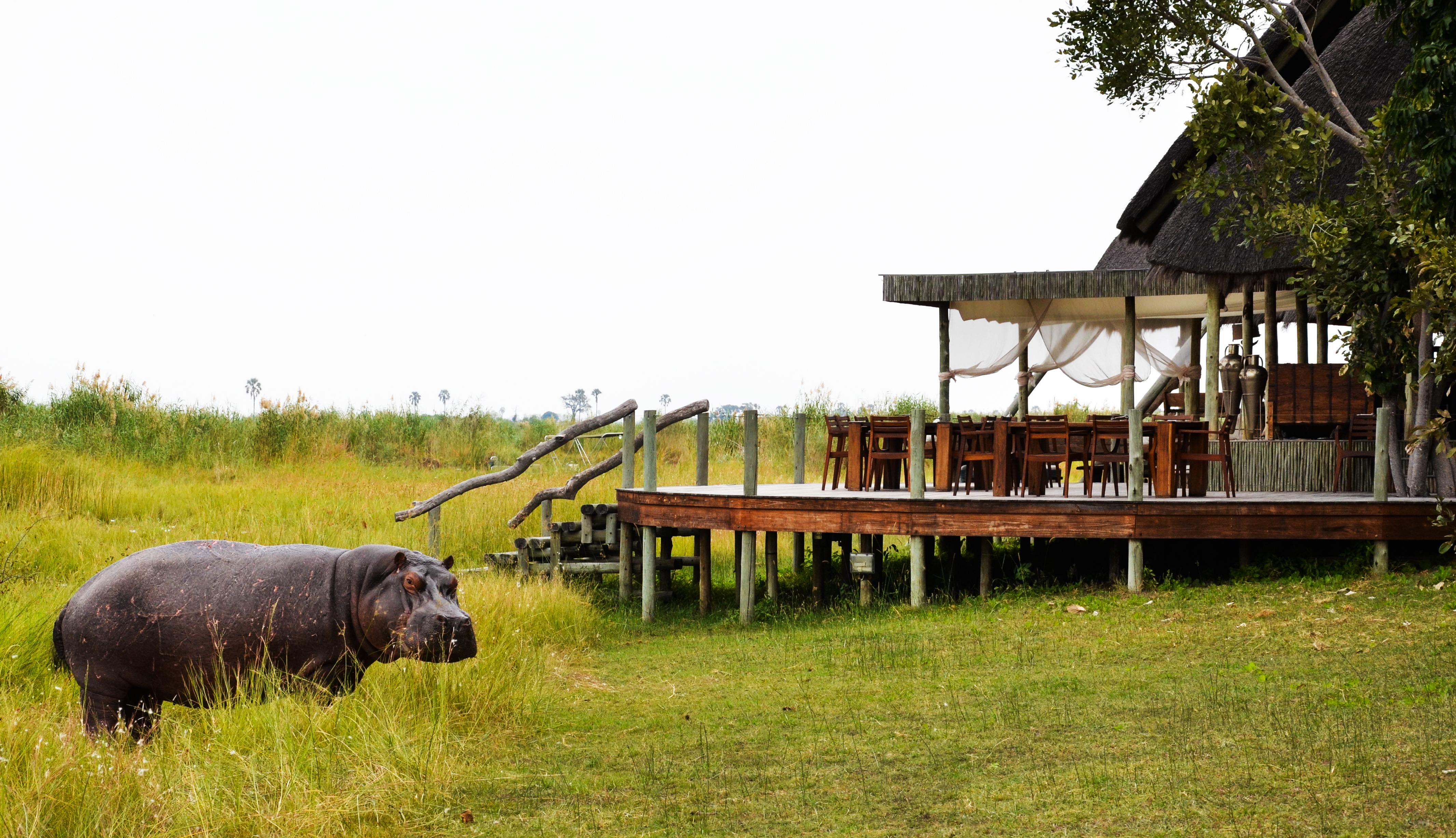 Selinda Camp Botswana Exterior Hippo