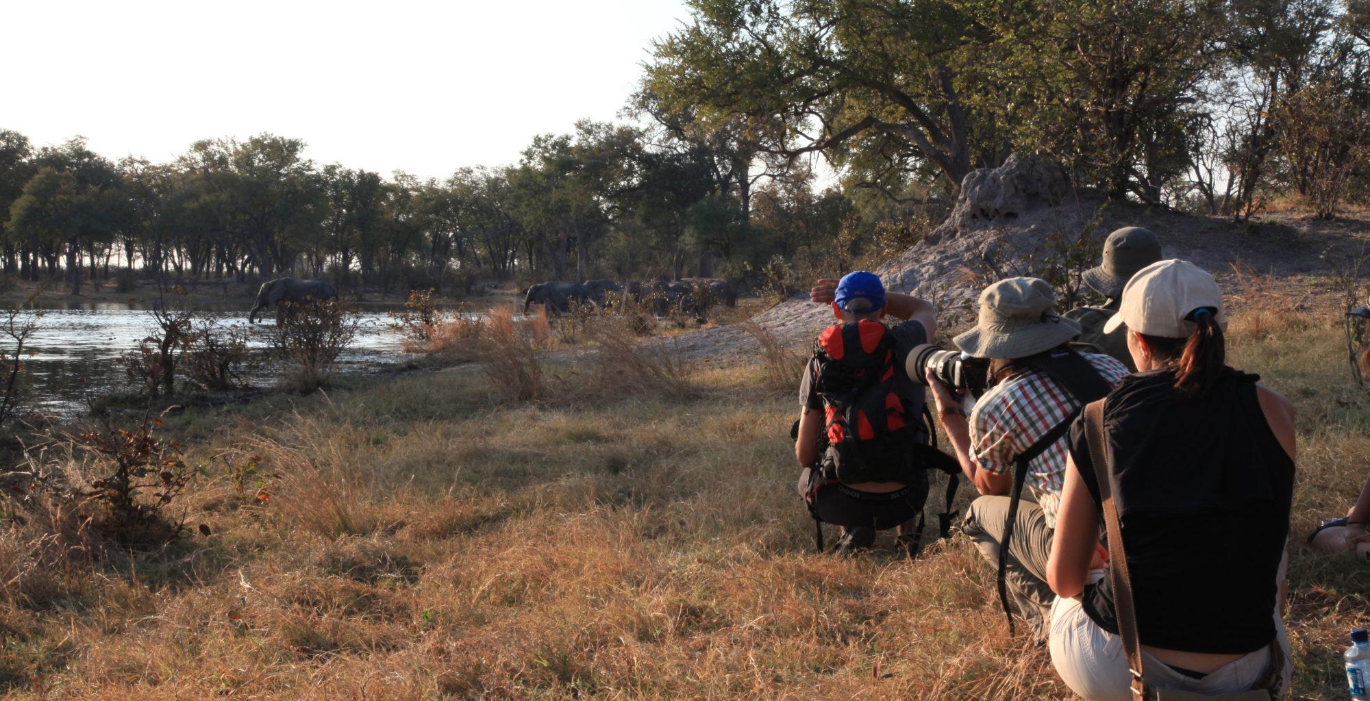 SelindaCanoeTrail Botswana Game Walk