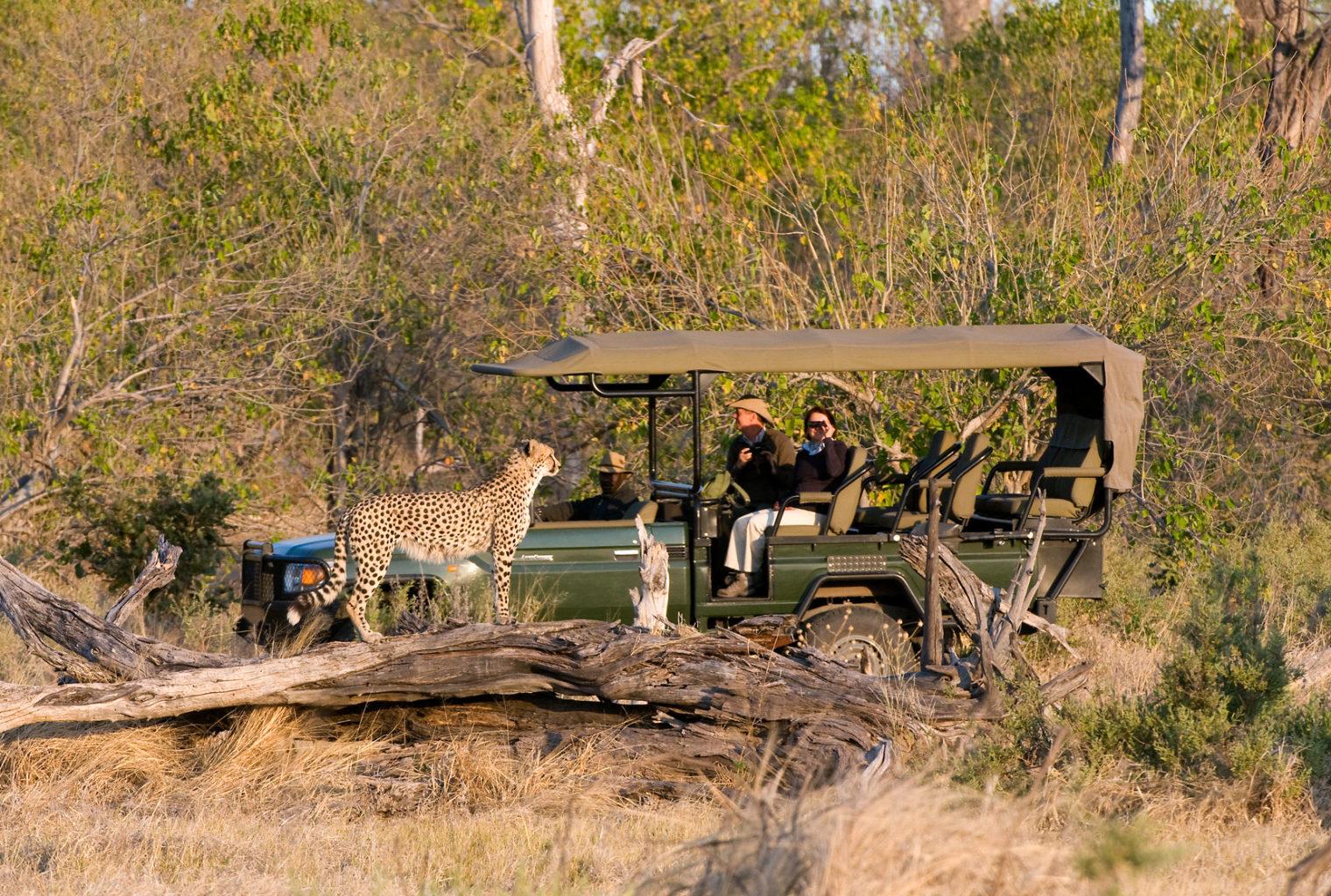 Zarafa_Bell_Botswana-Safari