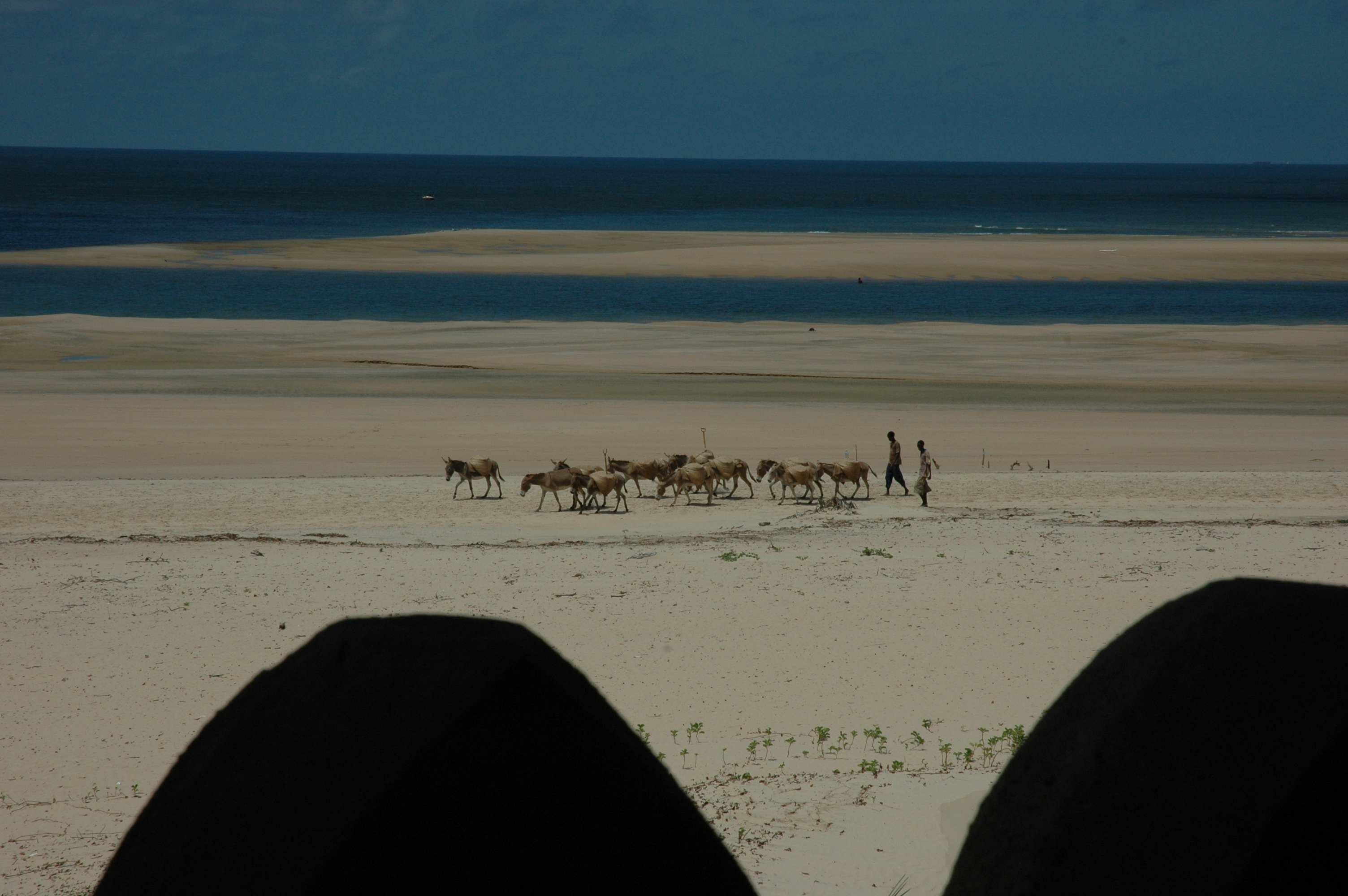 The Fort Kenya Animals