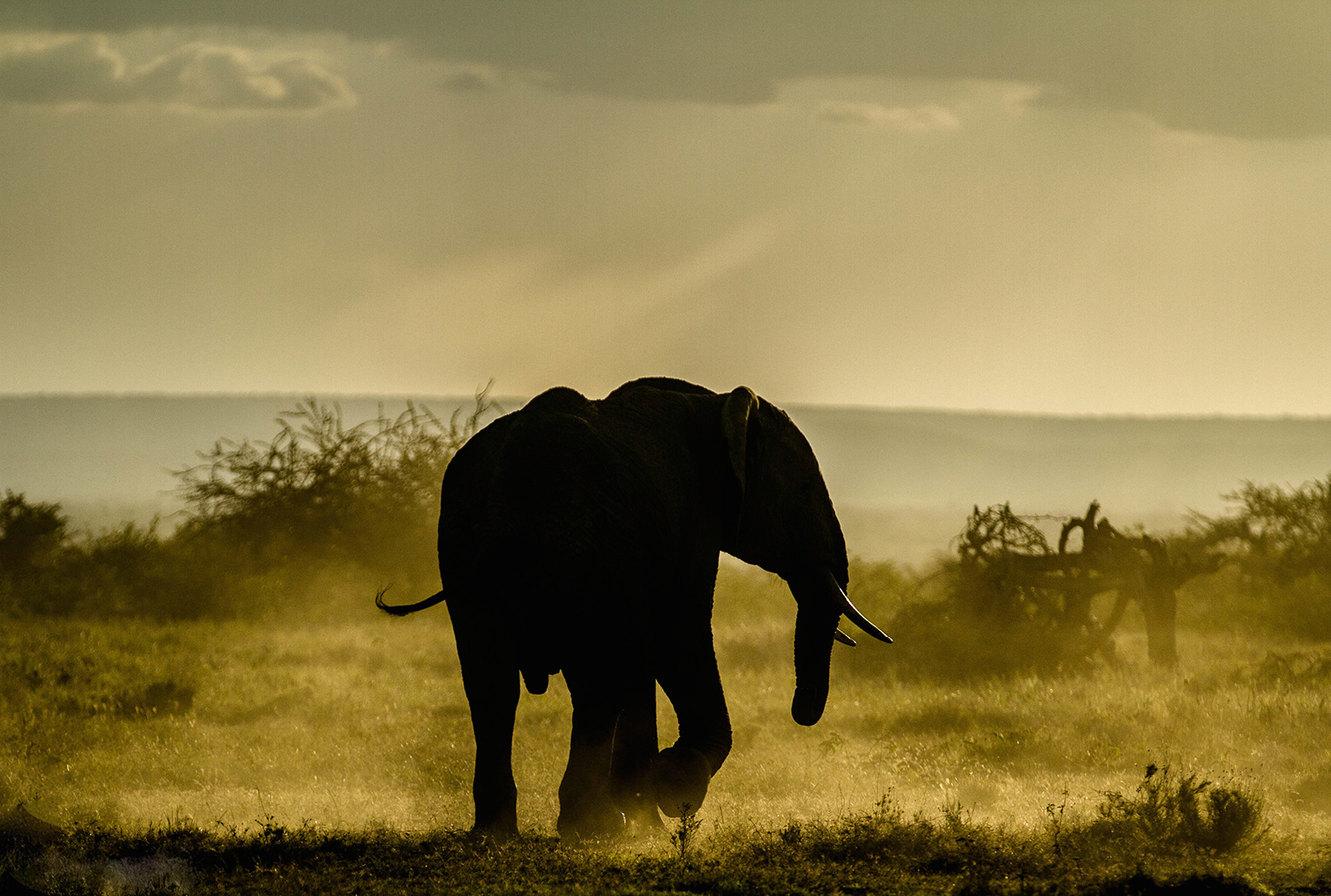 Ekorian's-Mugie-Camp-elephany