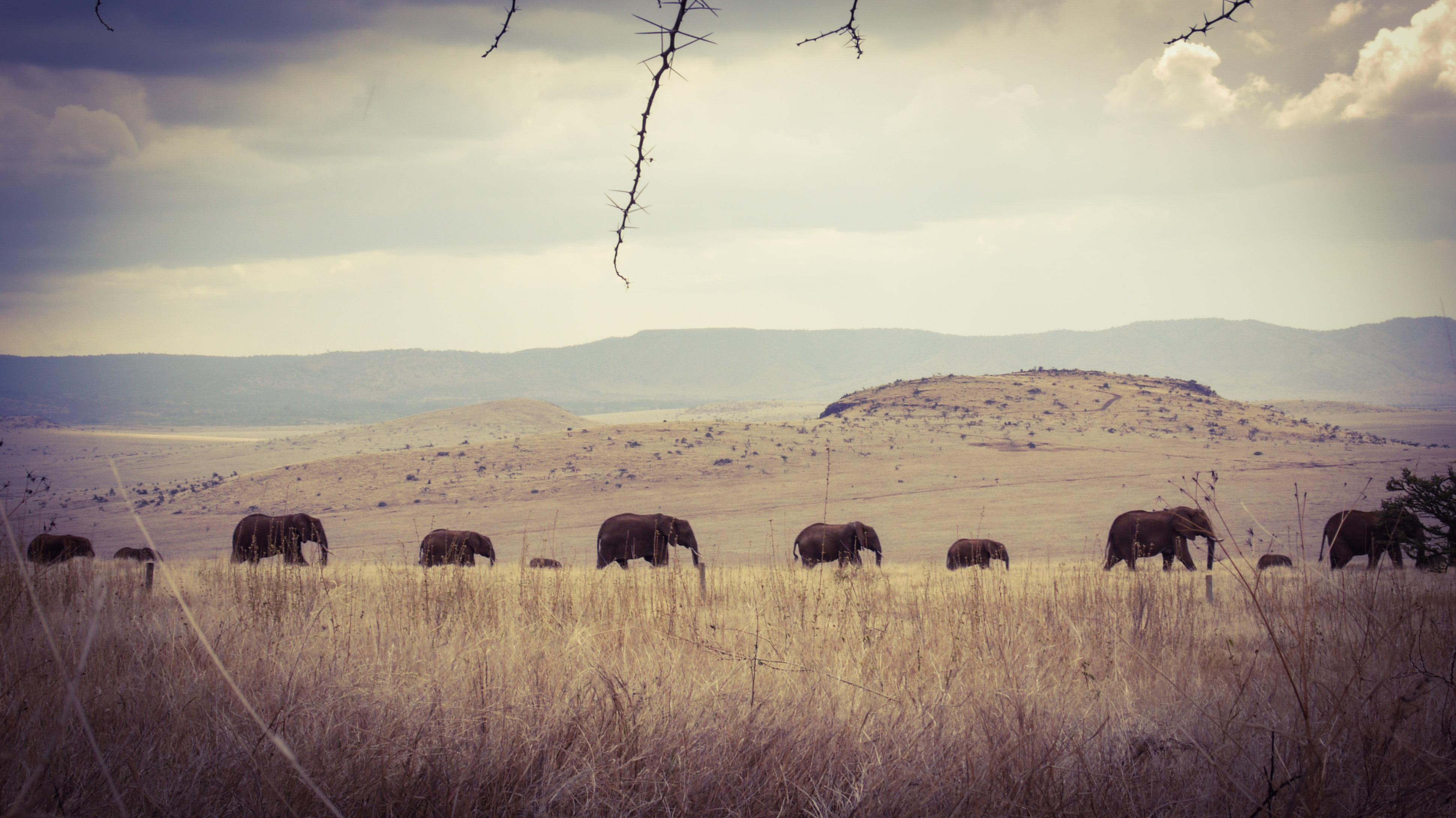 Lewa-House-Kenya Elephants