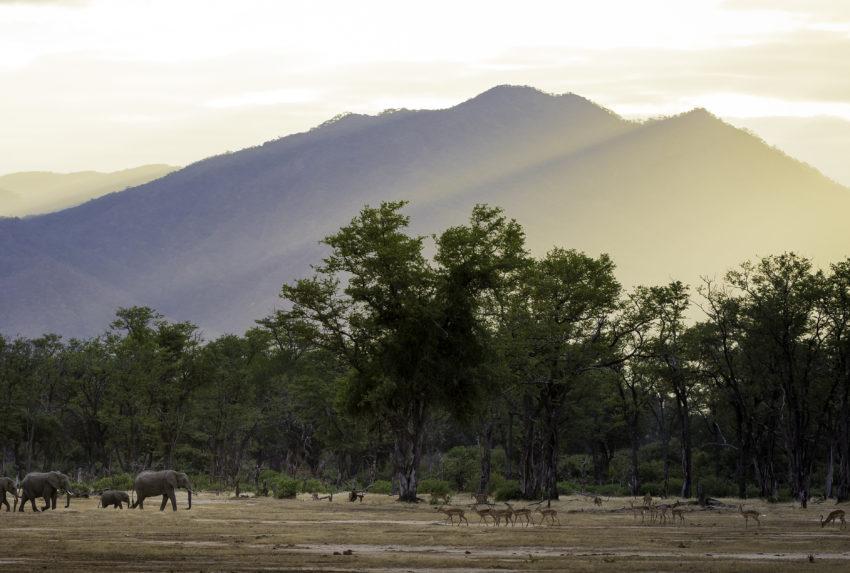 Elephants and impala at Ruckomechi in Zimbabwe