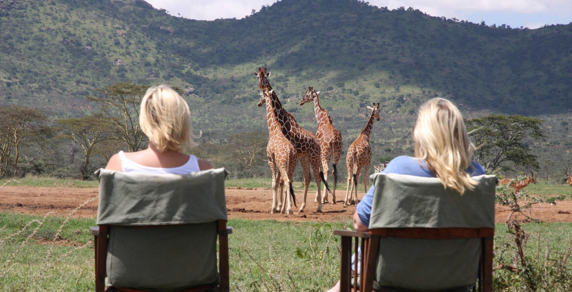 Enasoit Kenya Camp Evening Giraffes on waterhole