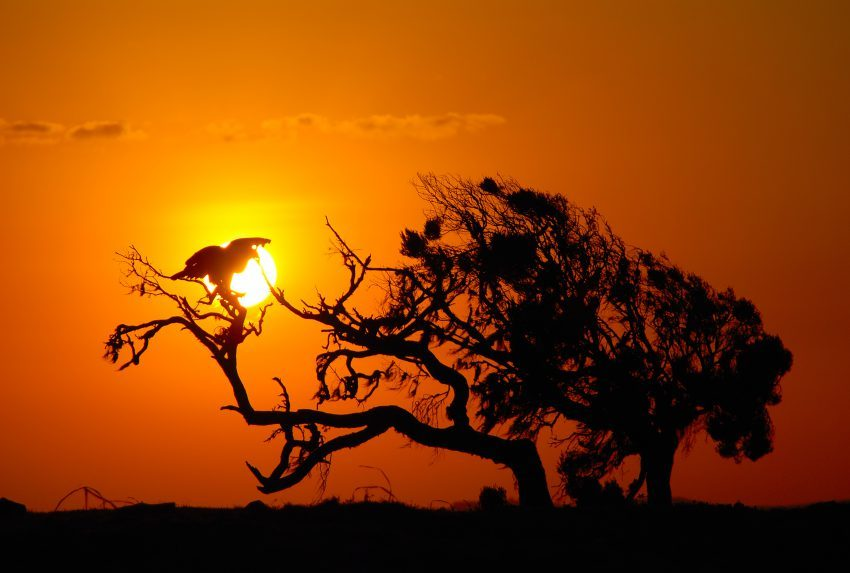 Kenya-Walking-Wild-Sunset