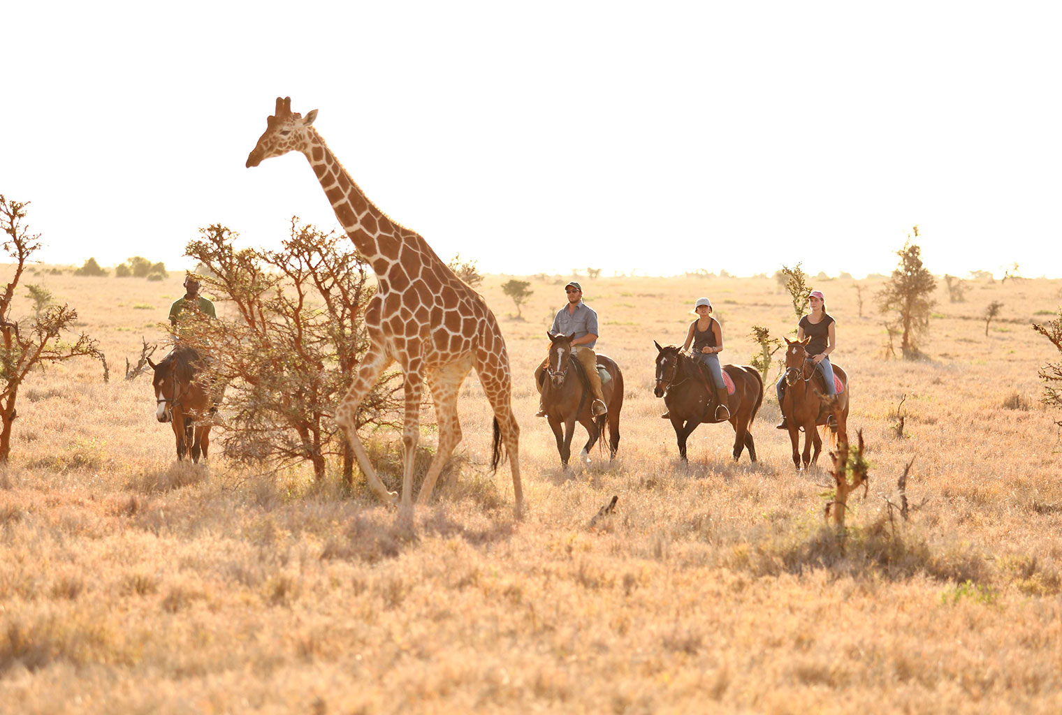 Lewa-Wilderness-Kenya-Horse-Riding-Wildlife