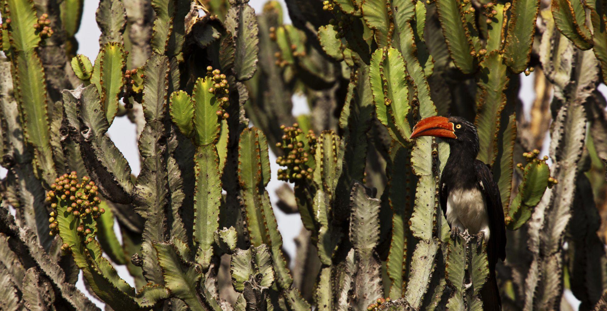 Kenya-Mara-Expeditions-Wildlife