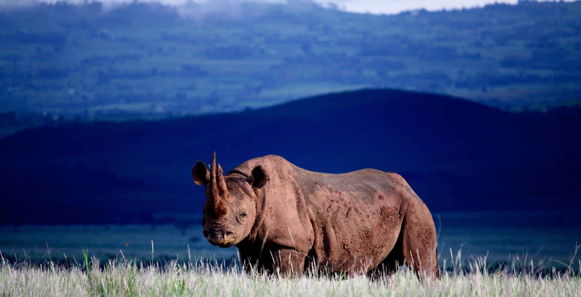 Lewa-House Rhino Kenya