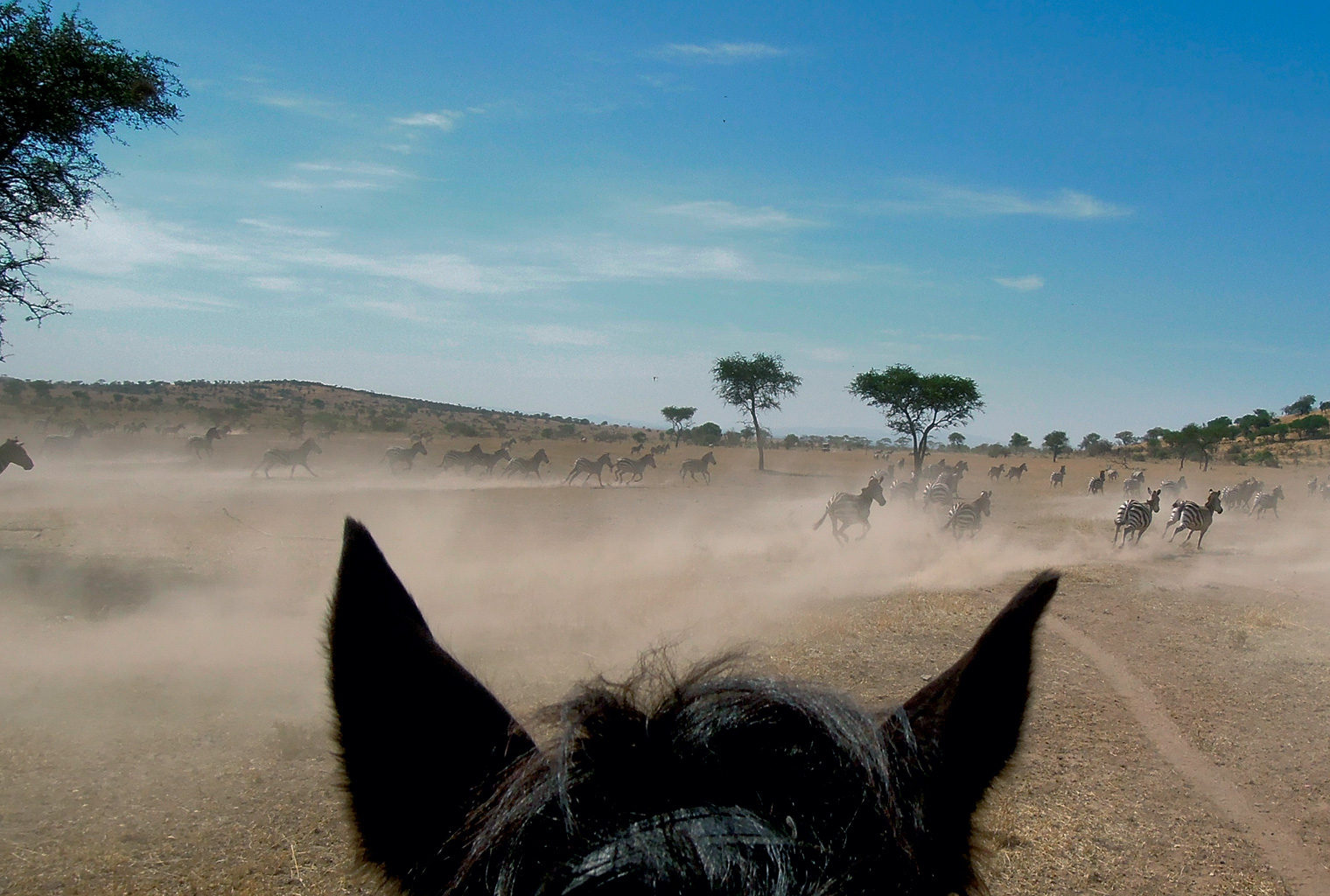 Ride-Kenya-View-from-on-Horsew