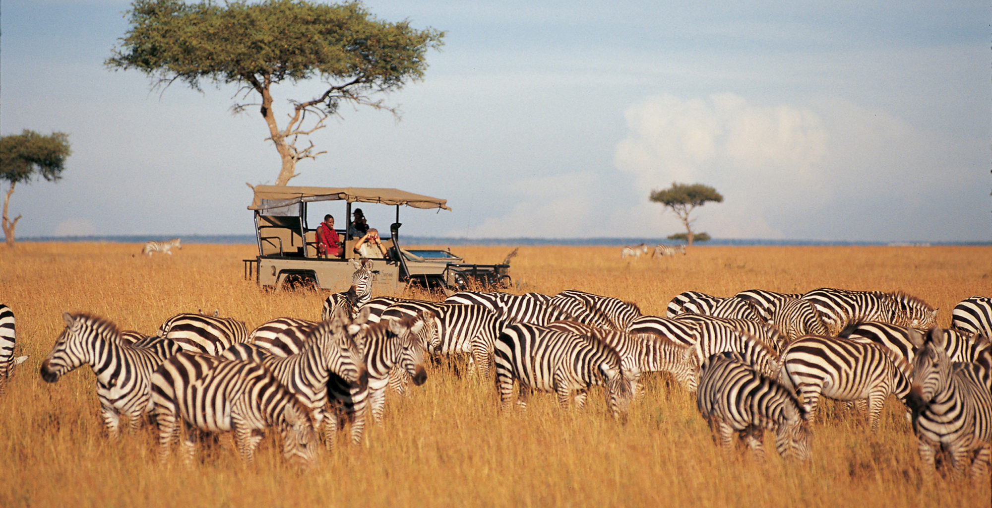 Kenya-Samburu-National-Reserve-Game-Drive-Zebra