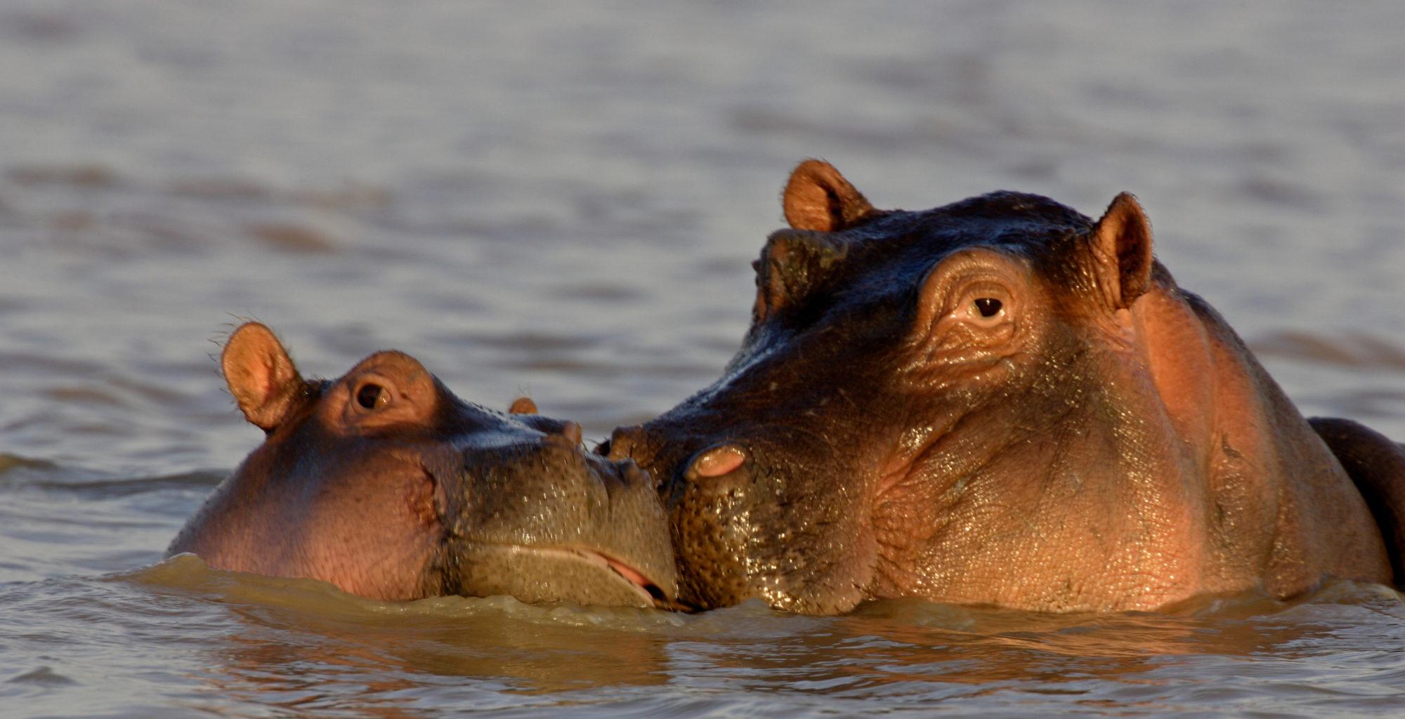 Great Rift Valley Kenya Hippos