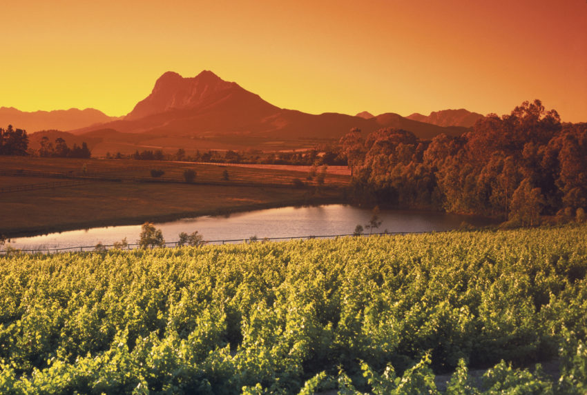 Vinyards of Franschhoek South Africa
