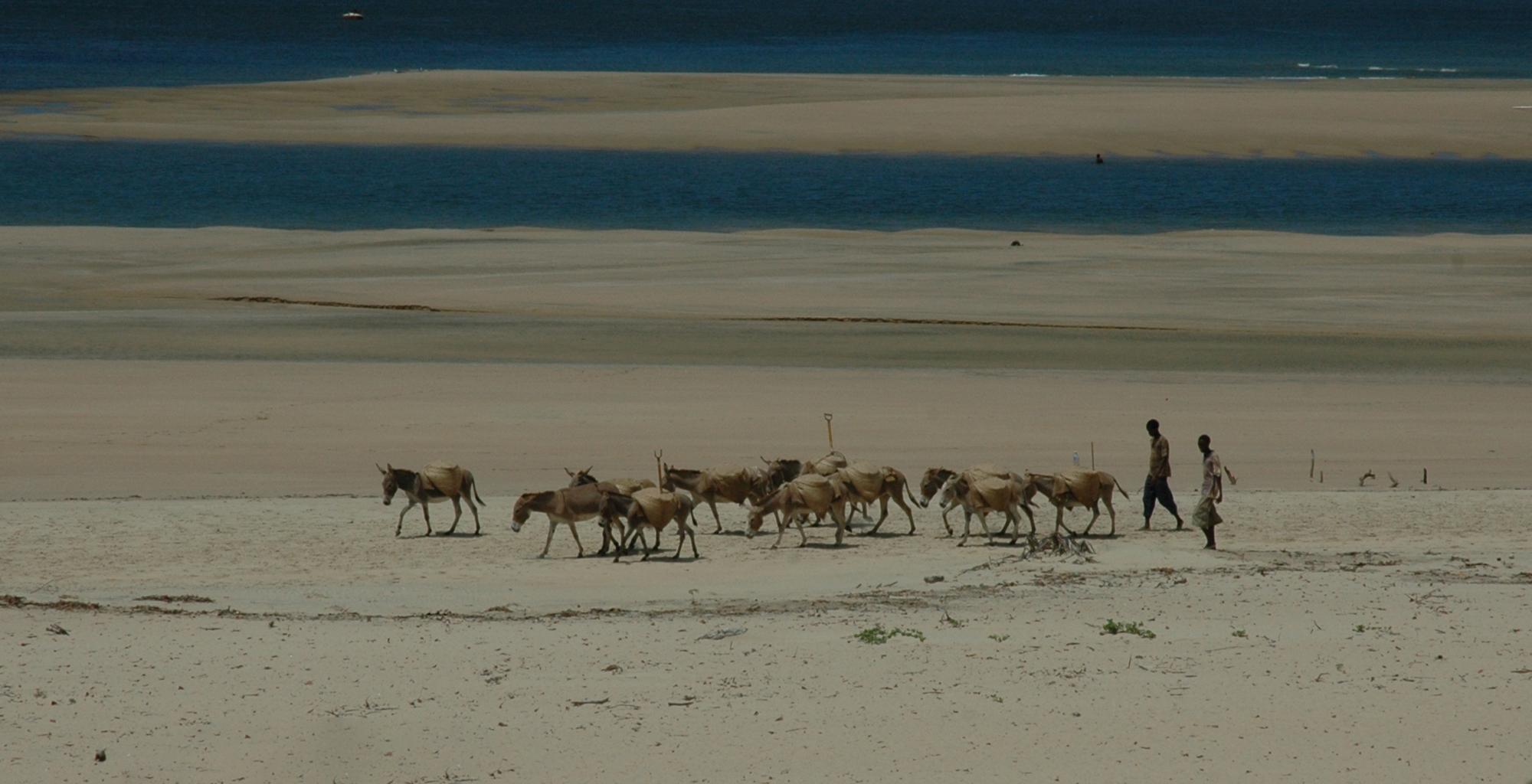 Kenya-The-Fort-Beach-Walk