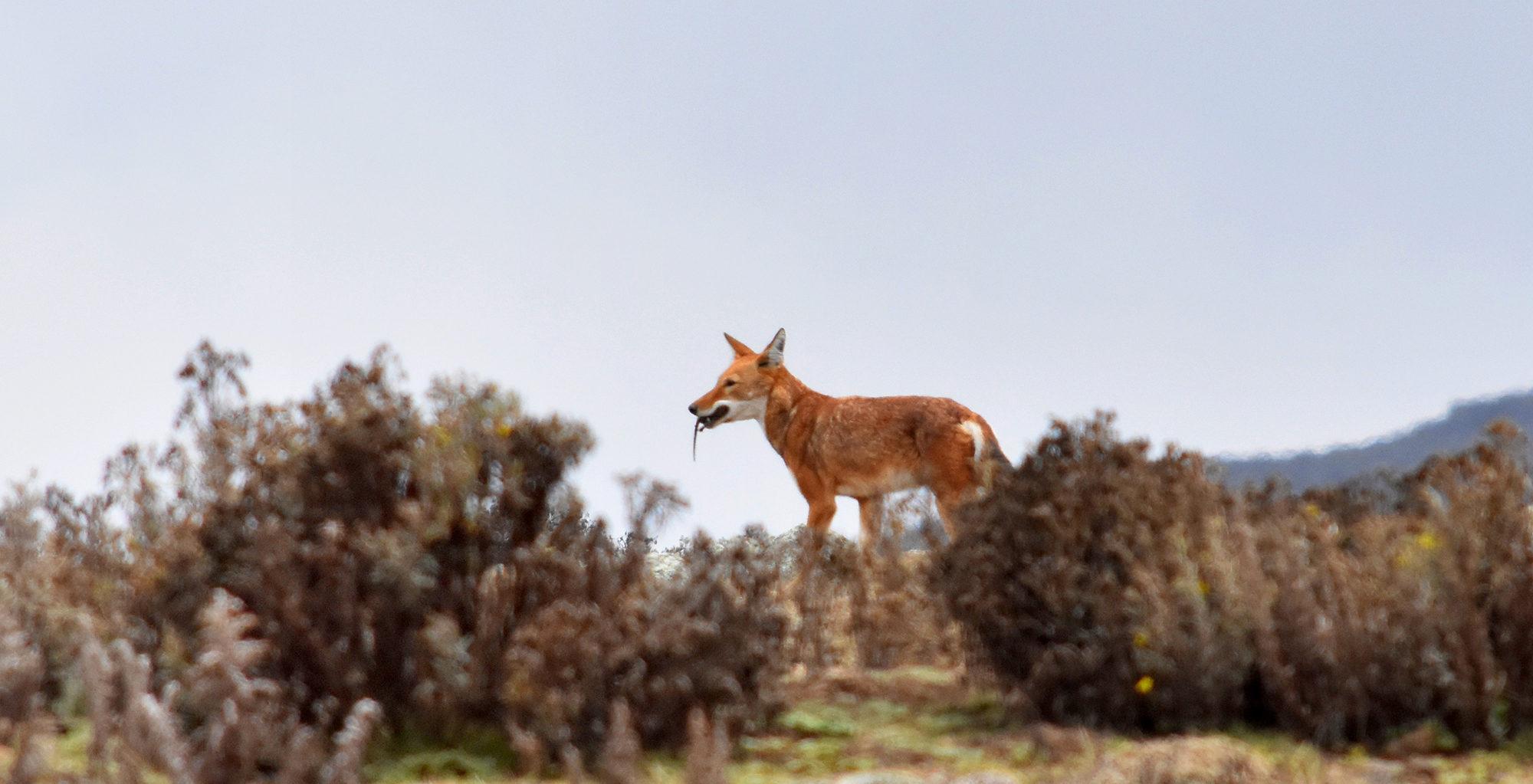 Ethiopia-Wildlife