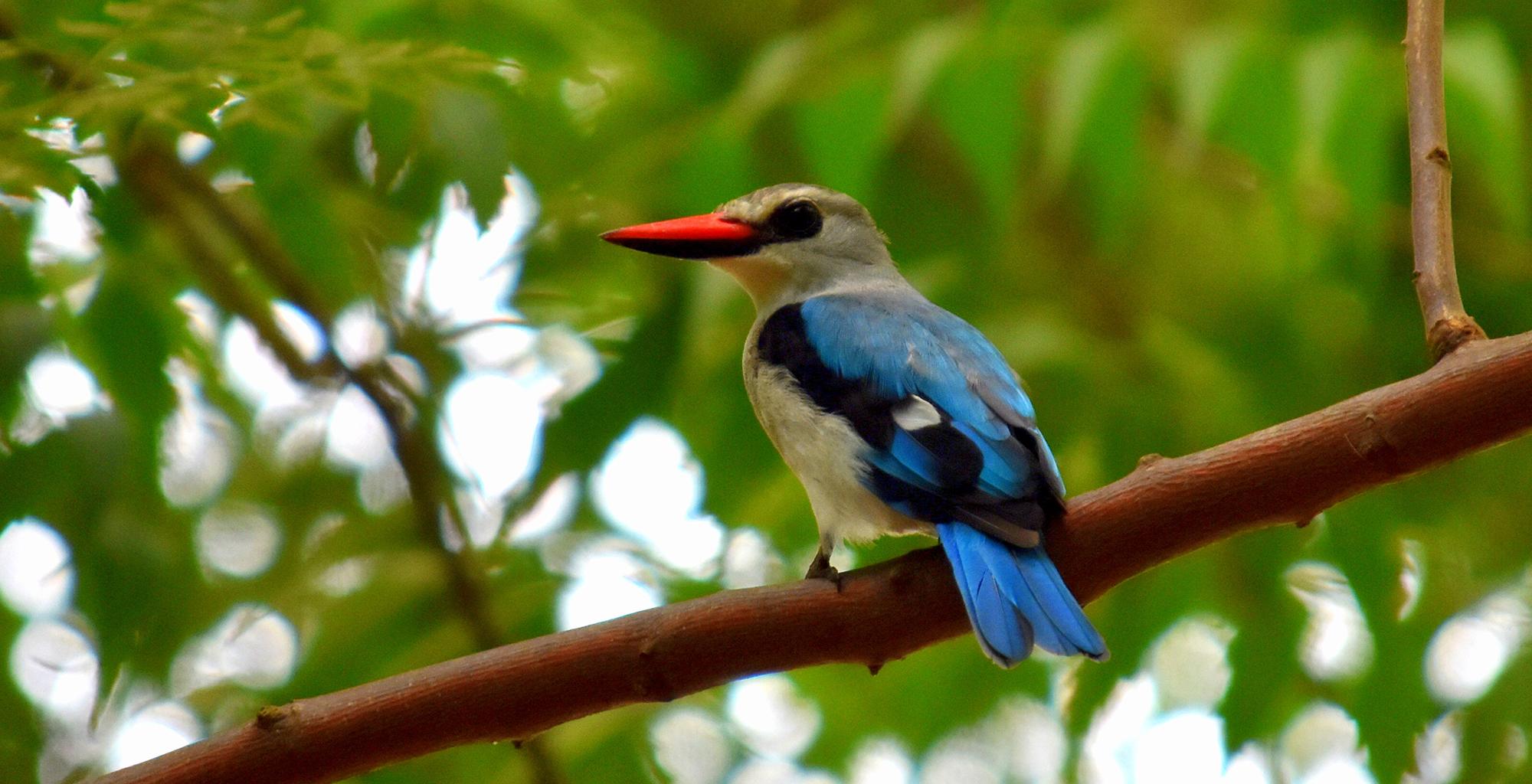 Ethiopia-Birdlife