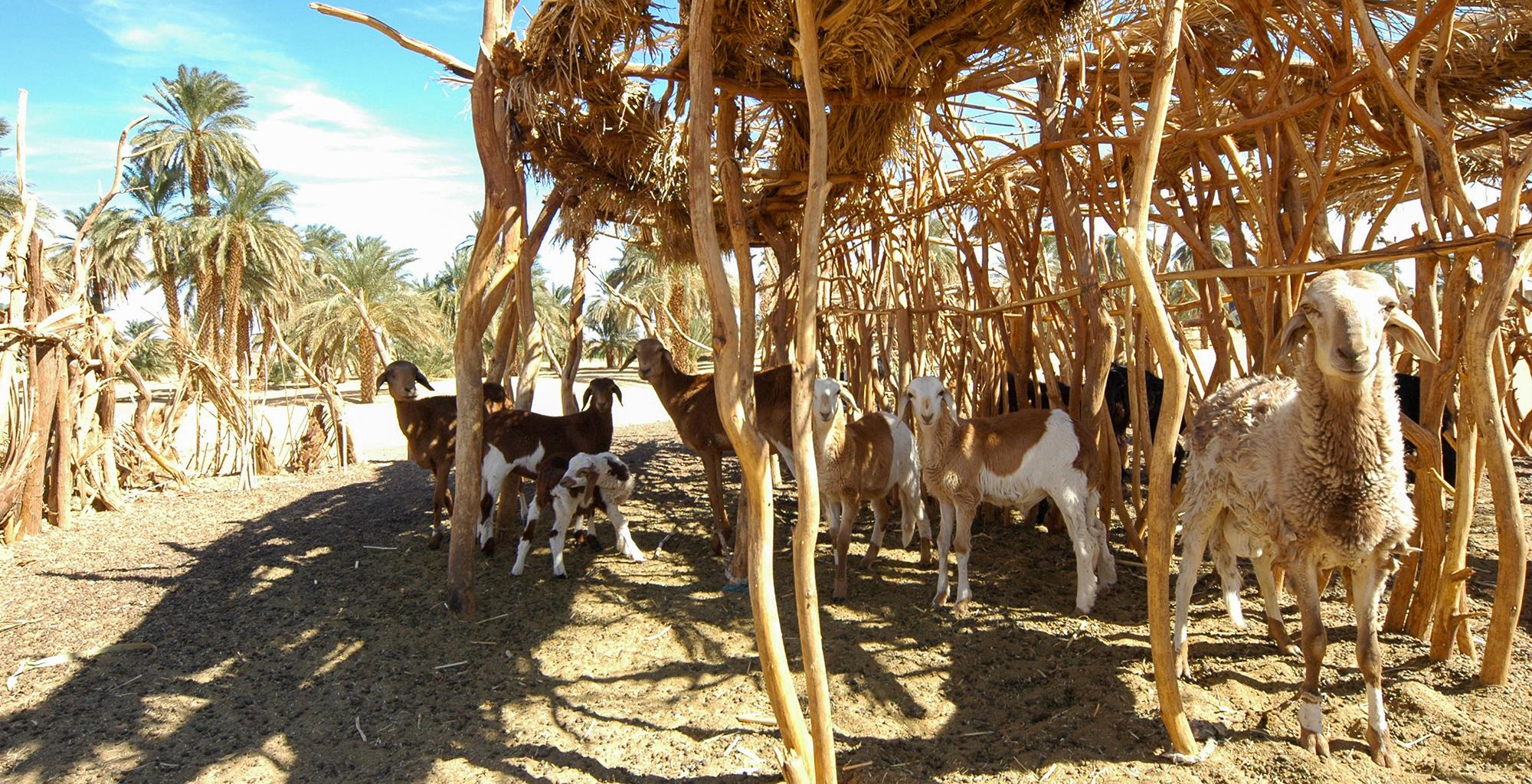 Sudan-Animals
