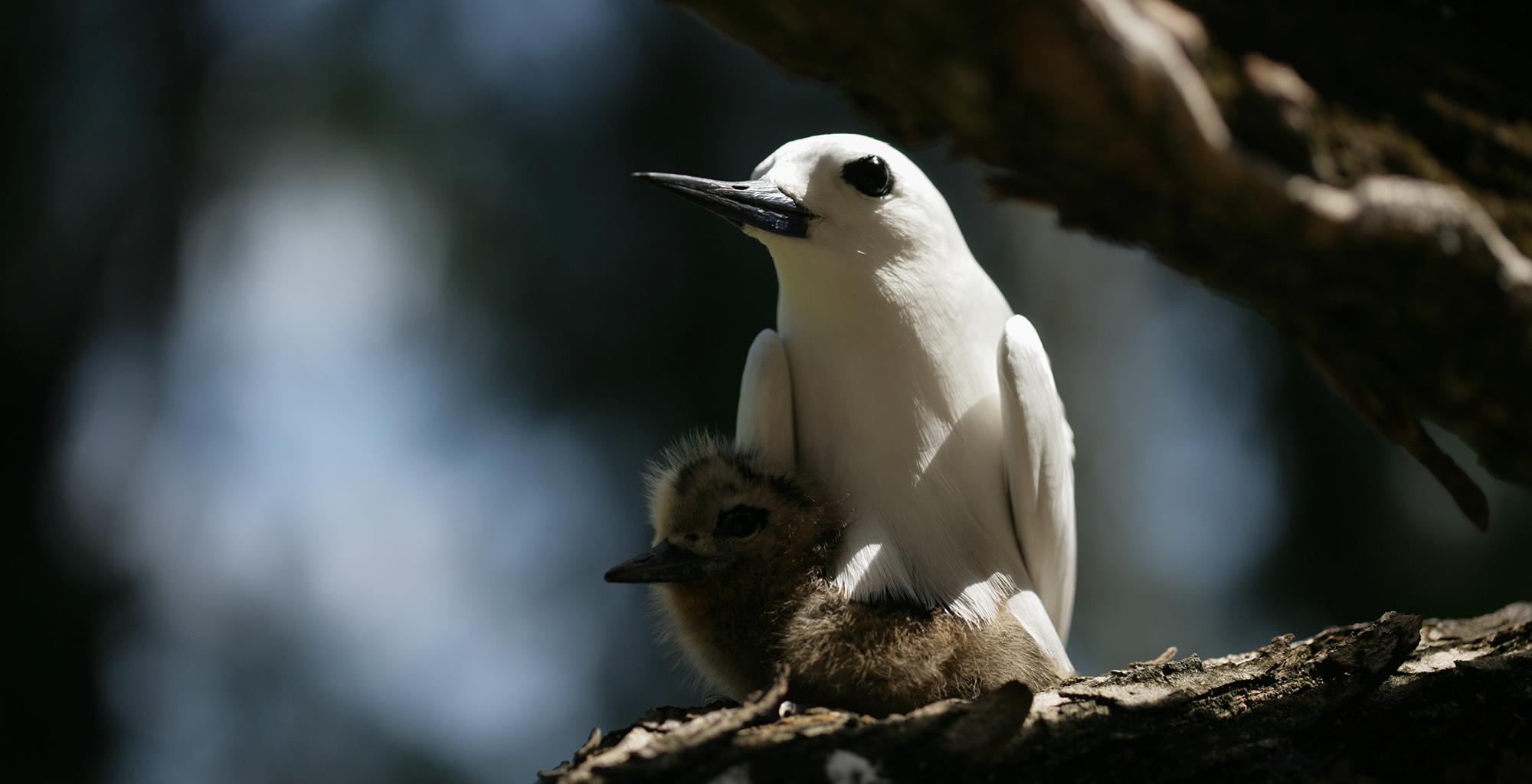 Seychelles-Wildlife-Birds