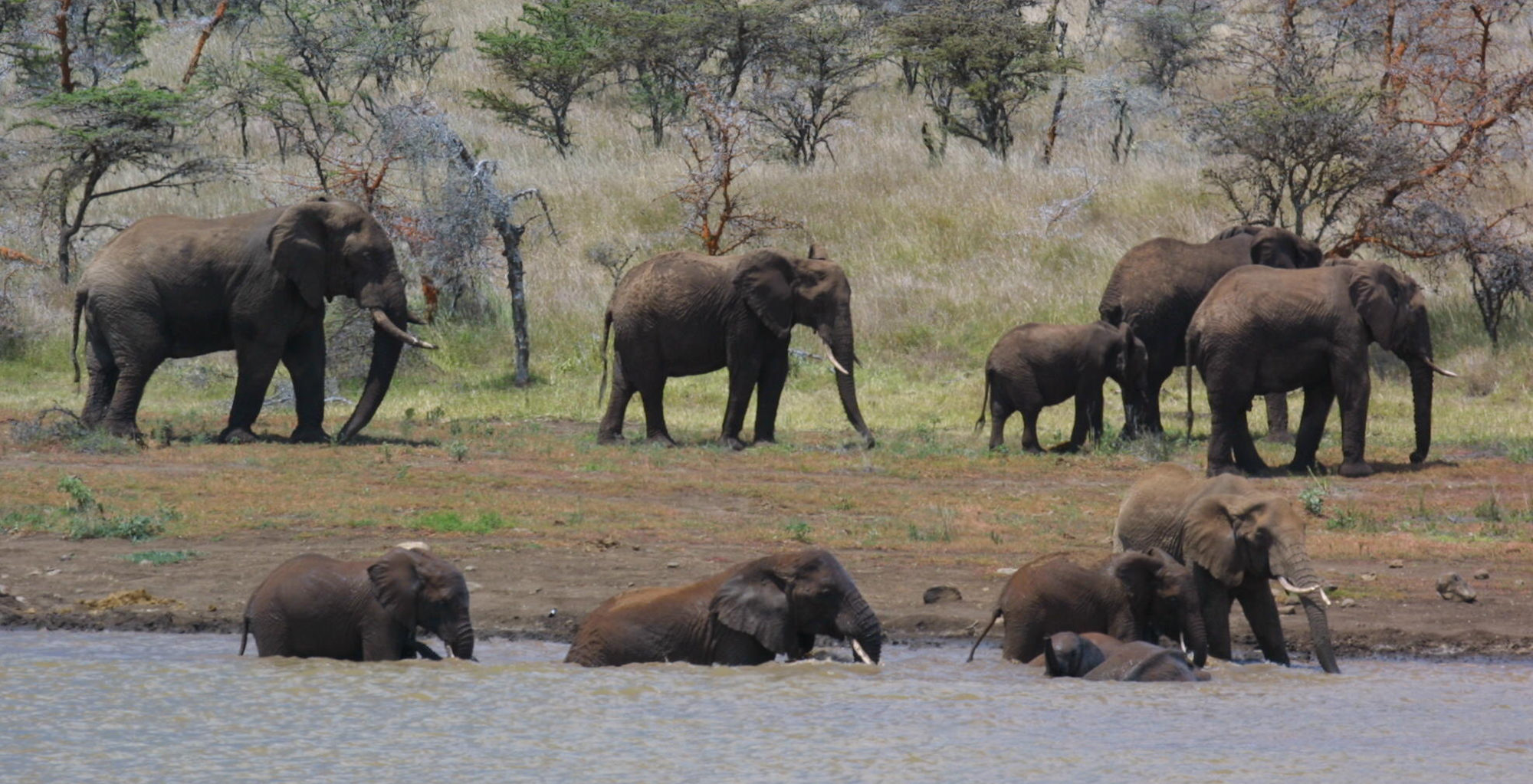 Kenya-Il-Ngwesi-Elephant