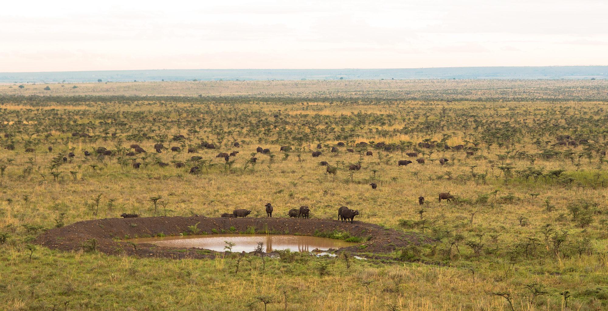 Kenya-Nairobi-Waterhole