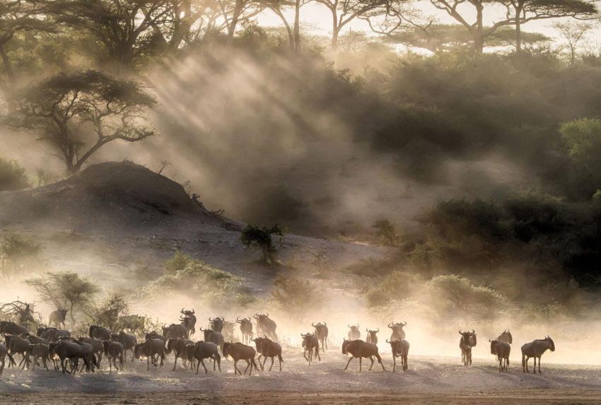 Tanzania-Wildebeest-Migration