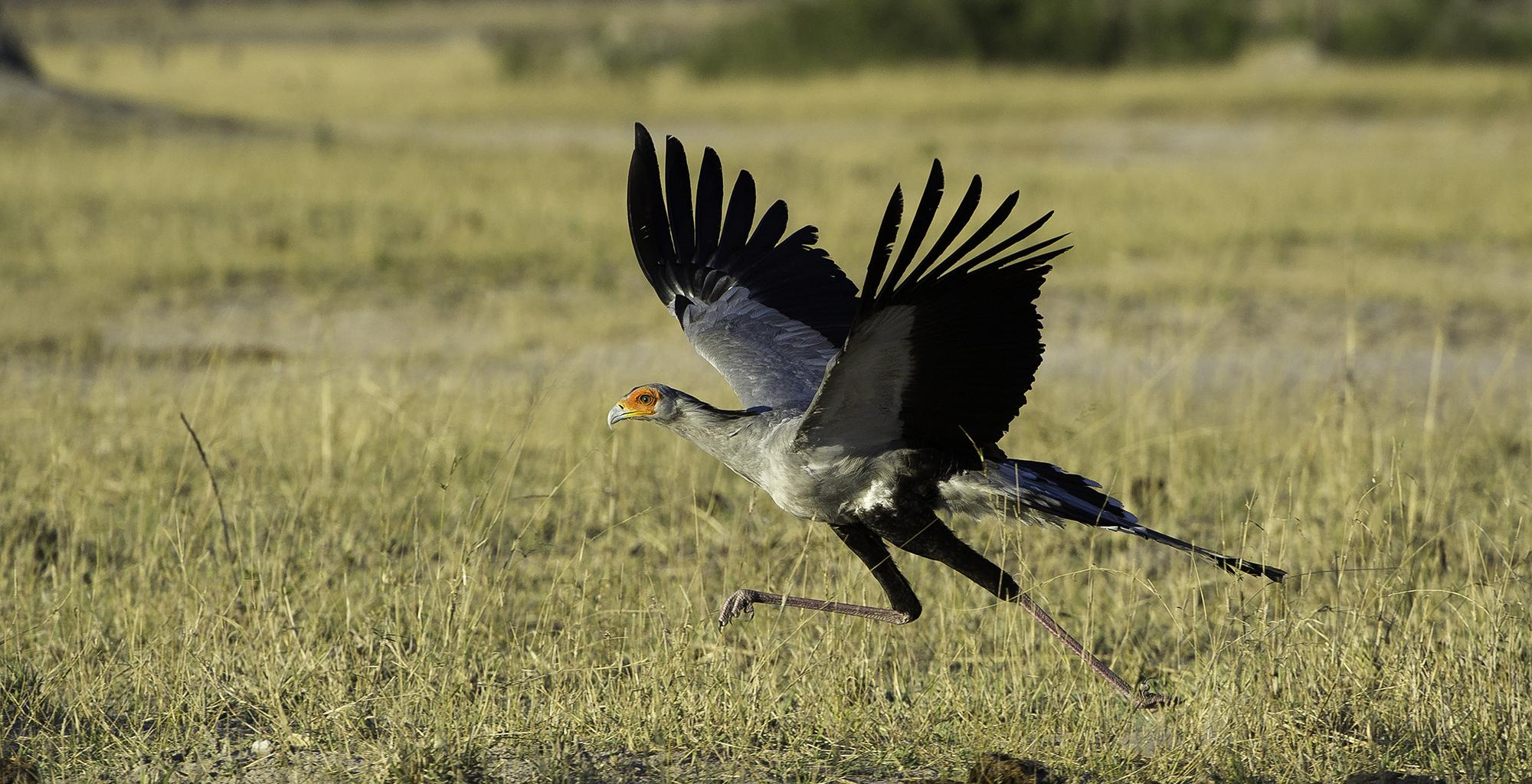Zimbabwe-Wildlife