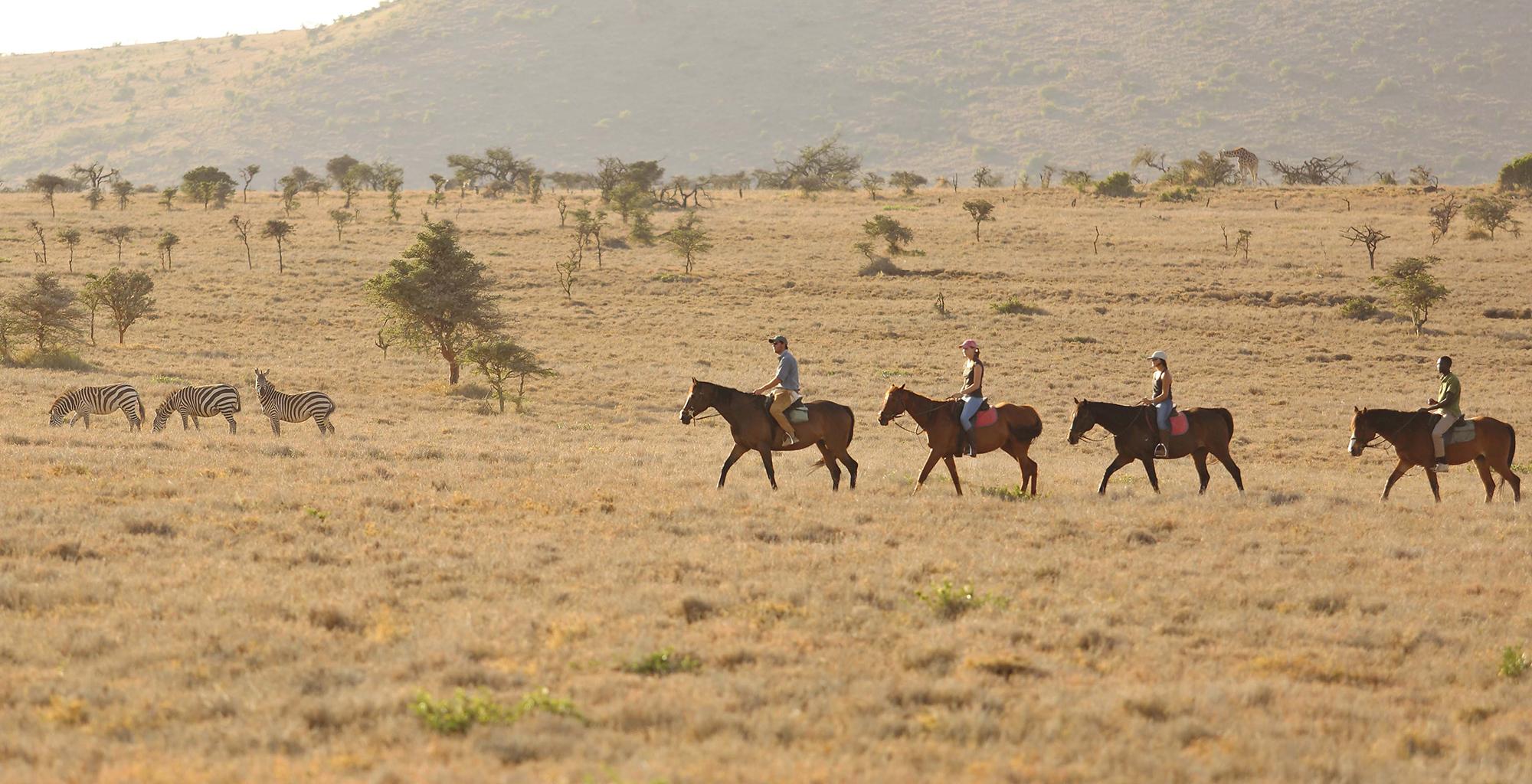 Kenya-Lewa-Wilderness-Horse-Zebra