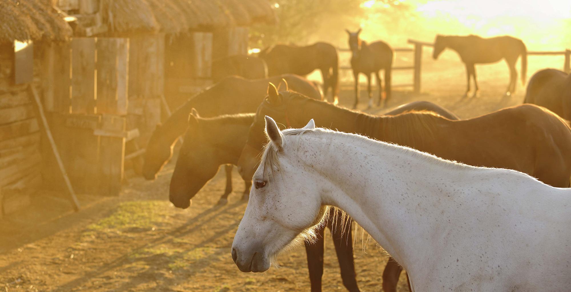 Kenya-Lewa-Wilderness-Horses
