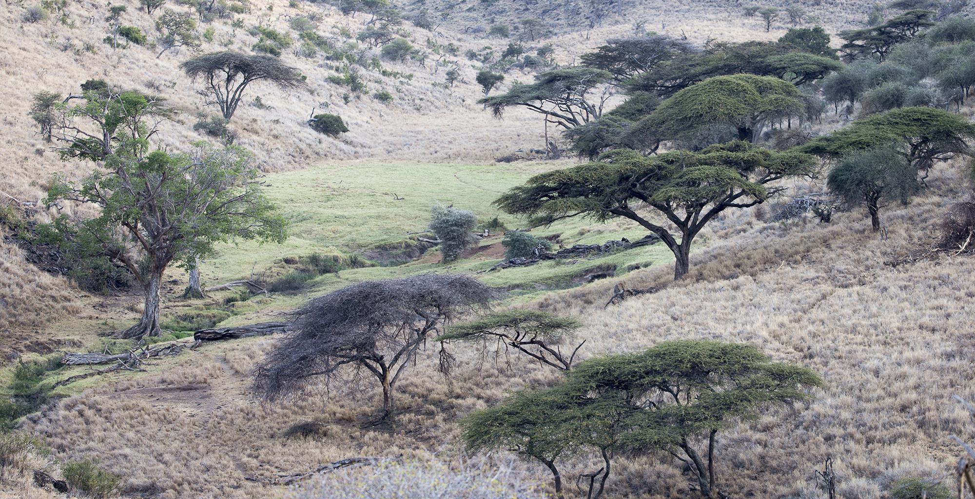 Kenya-Walking-Wild-Landscape